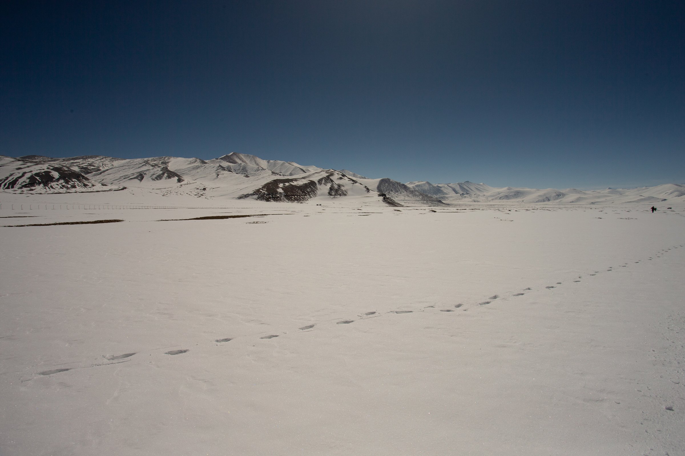 Pallas's Cat tracks at Tso Kar [Mike Watson]
