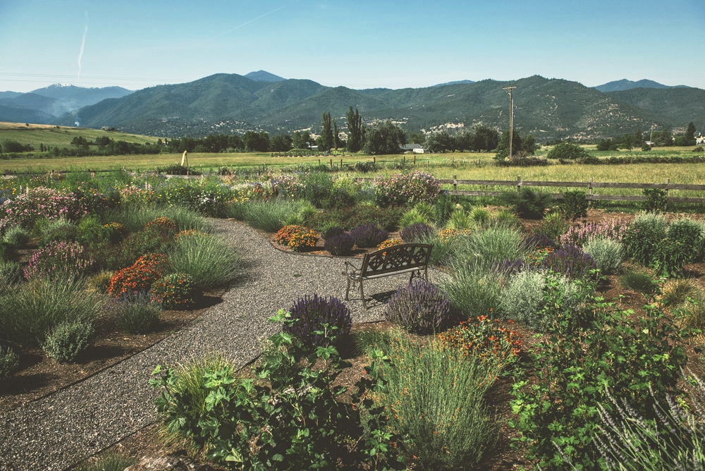 pollinator garden with bench + Ashland, Oregon + view of mount ashland + environmental landscaping + gravel pathway steel lined