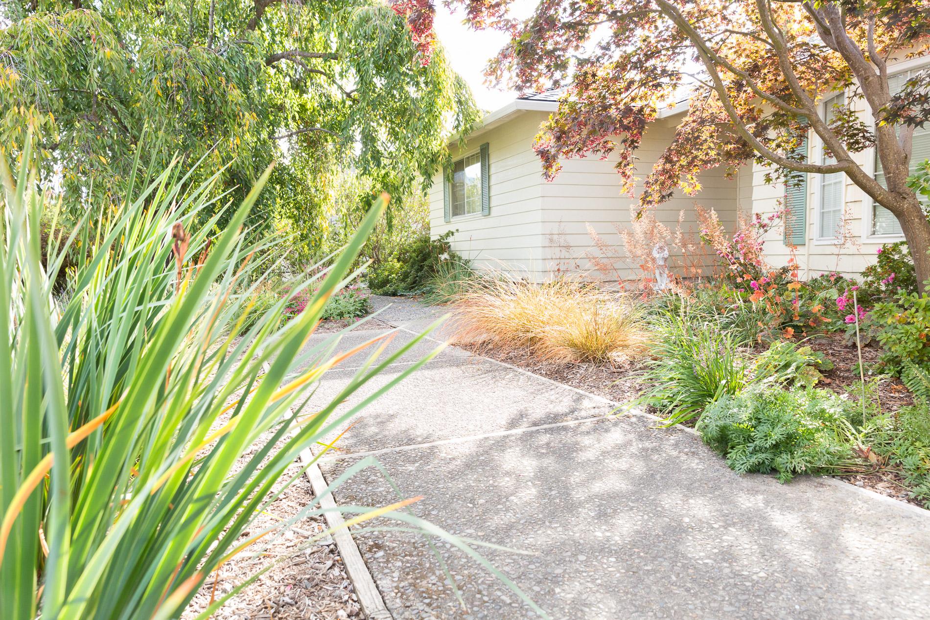 Shaded Concrete Entrance Path + Perennial Garden