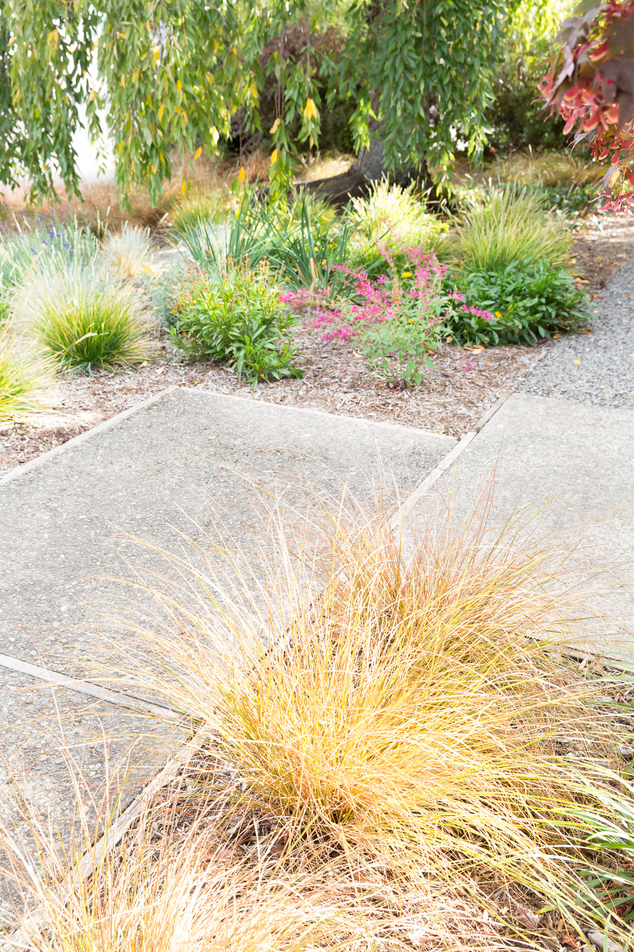 Inviting Entrance Garden + Drought-Tolerant Pollinator Perennial Garden