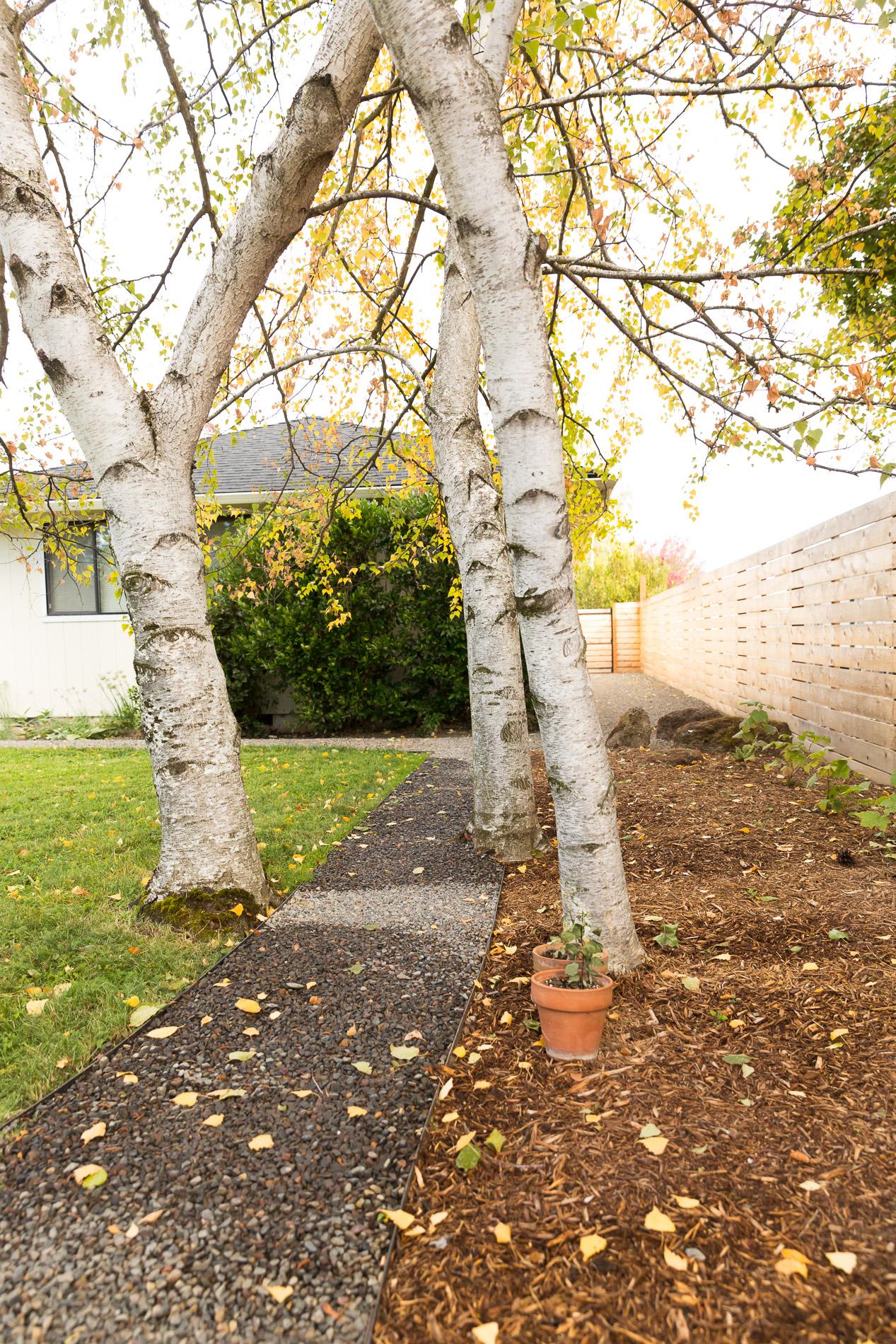 Weaving Gravel Pathway + Birch Trees