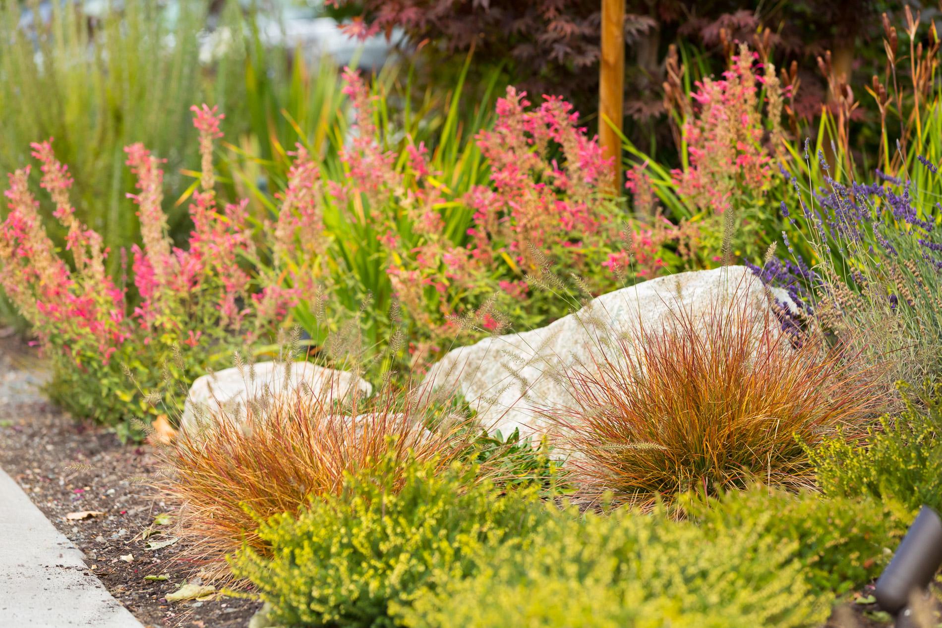 Pollinator Garden + Entrance Perennials + Boulders