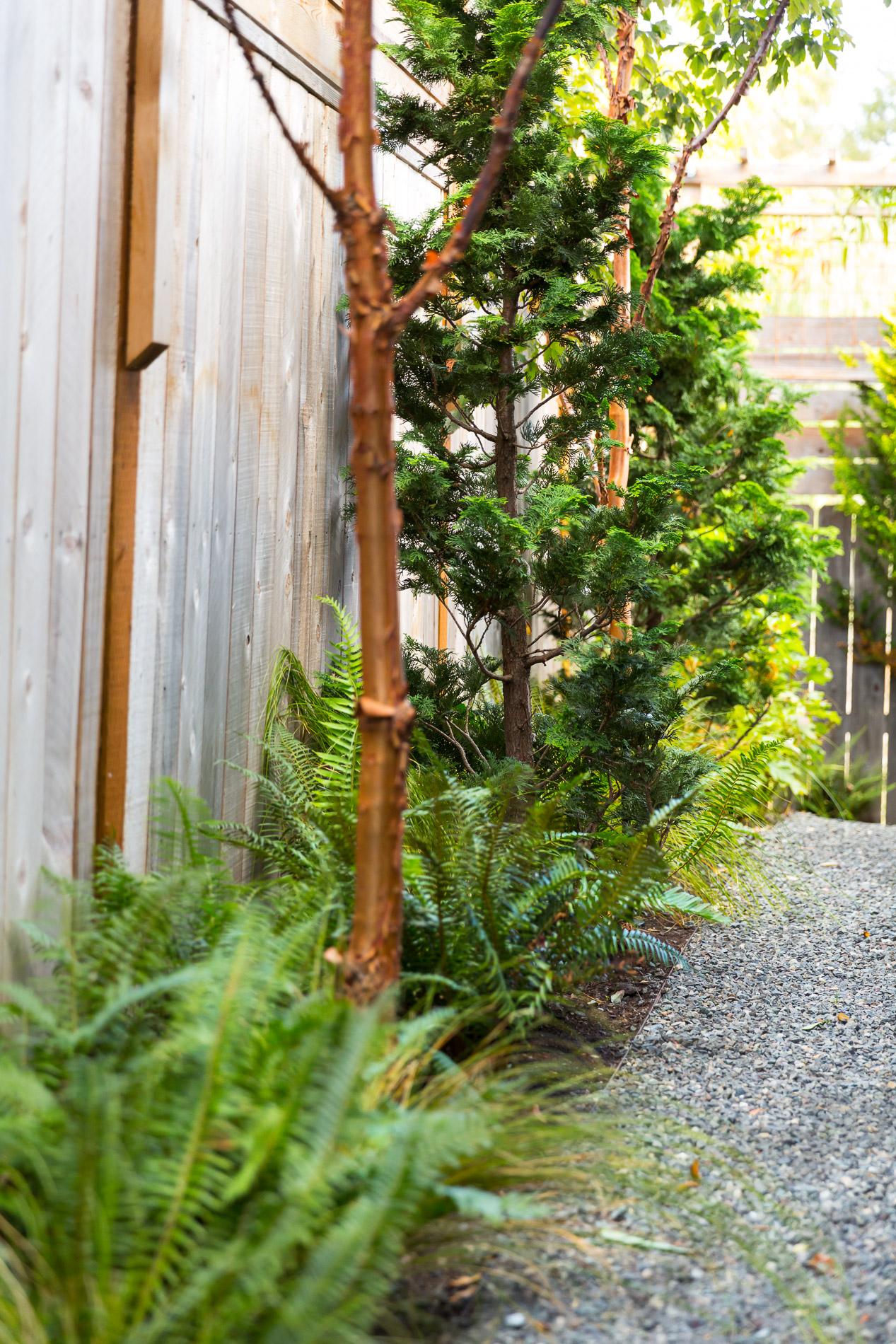 Woodland Edge Plantings + Gravel Side Path + False Cypress