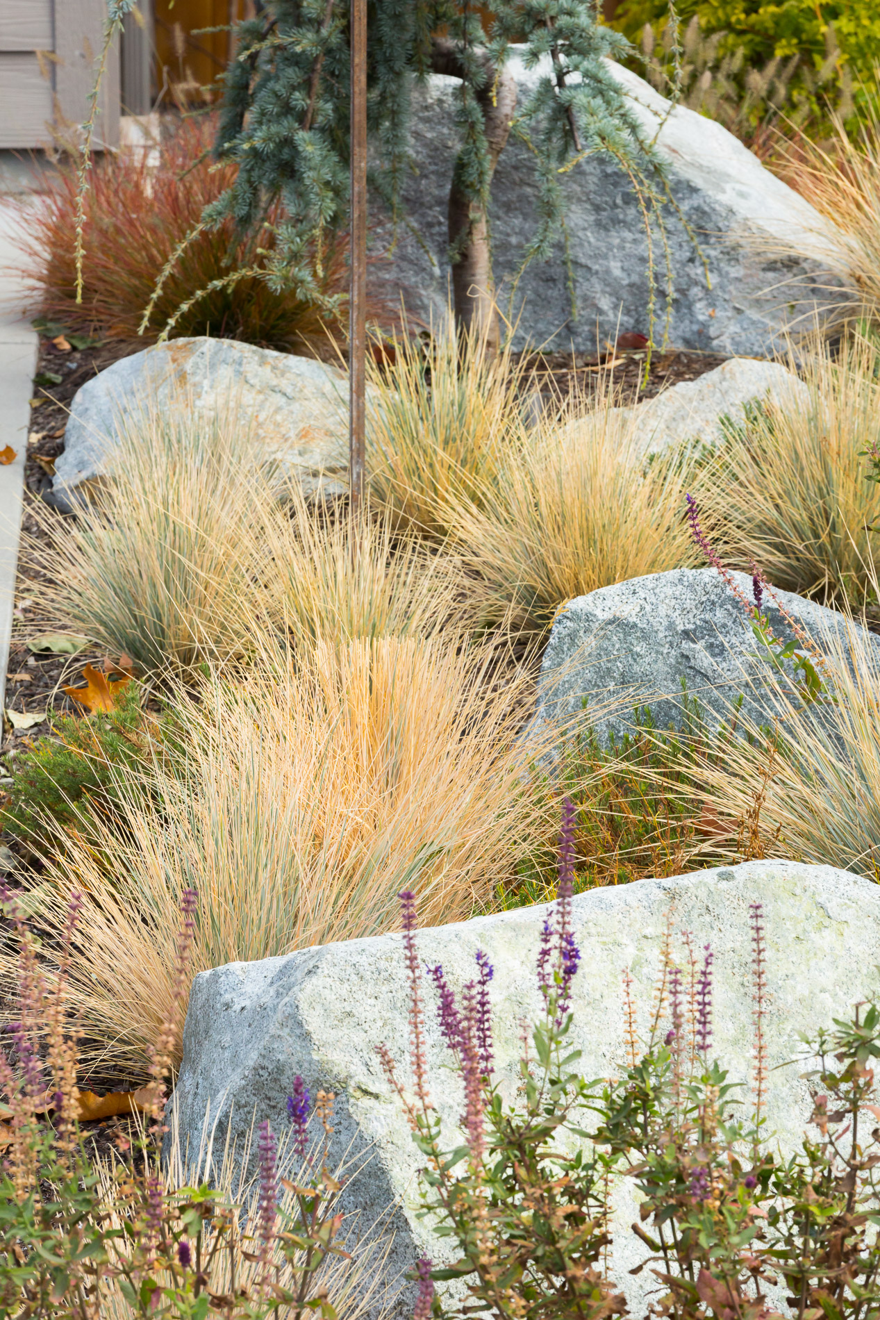 Drought-Tolerant Grass + Sedge Garden + Scattered Granite Boulders