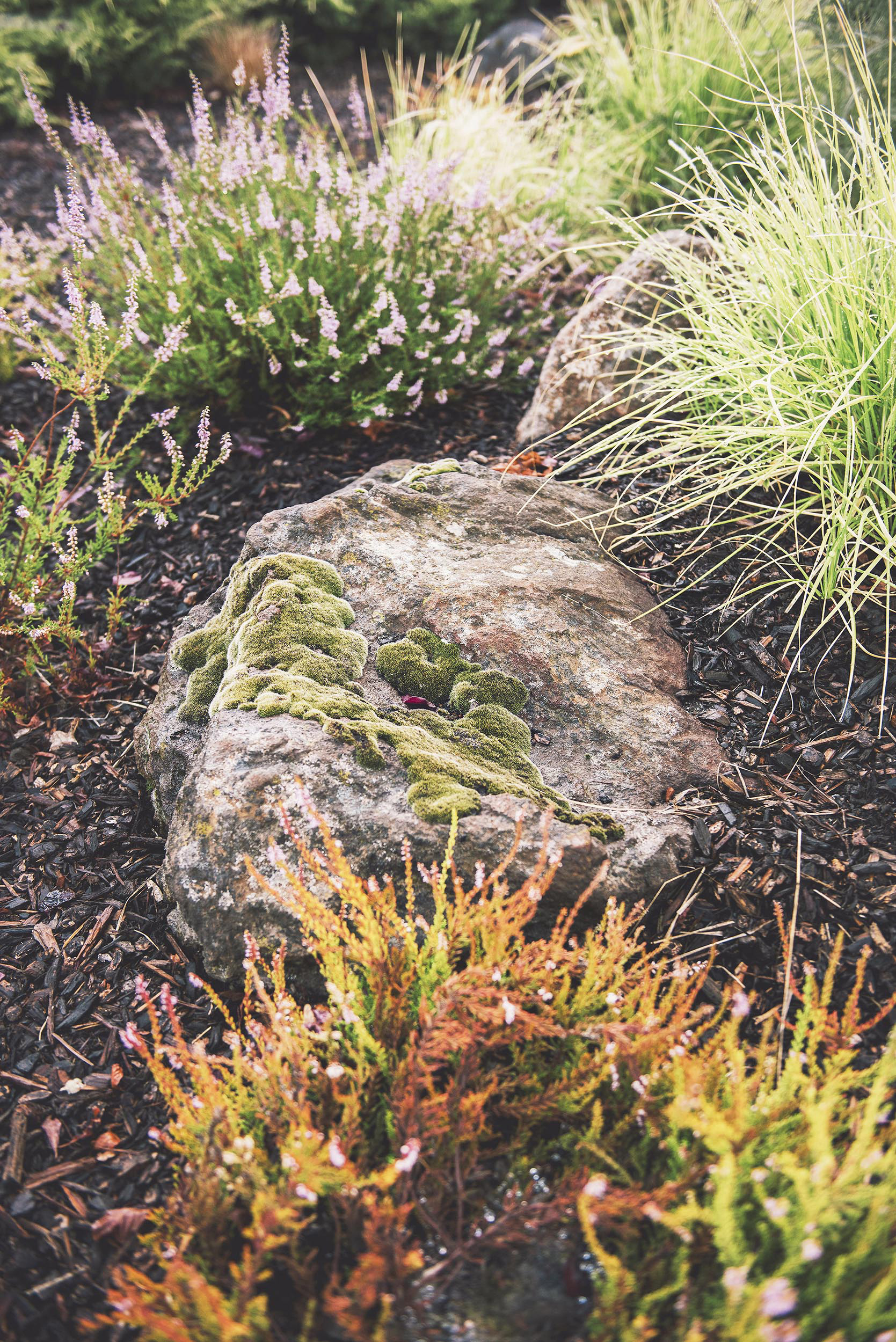 granite boulder + moss + calluna + bunch grasses + perennial PNW landscaping