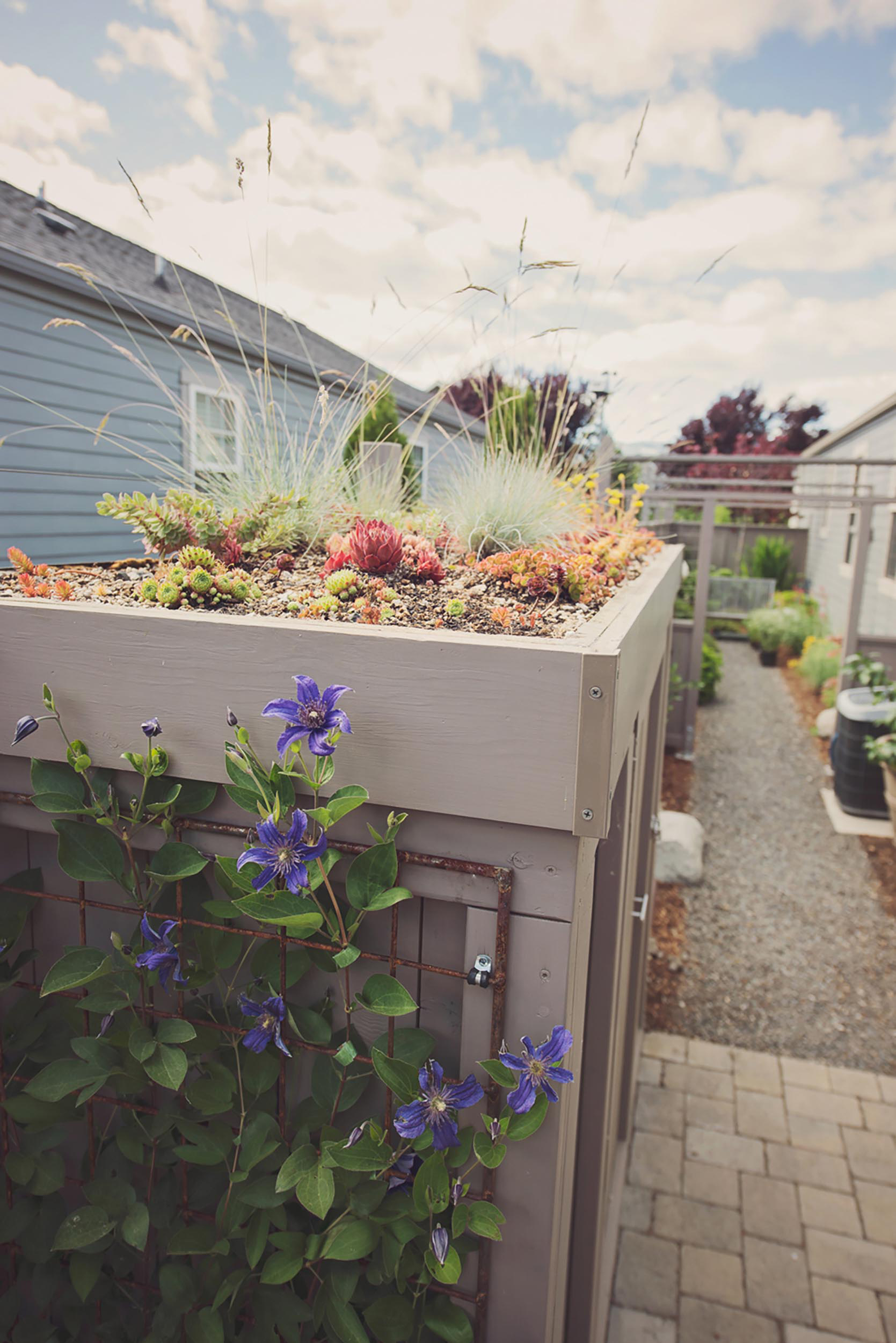 green roof on shed + sedum drought tolerant plantings + climbing clematis on steel wire trellis + holland style pavers