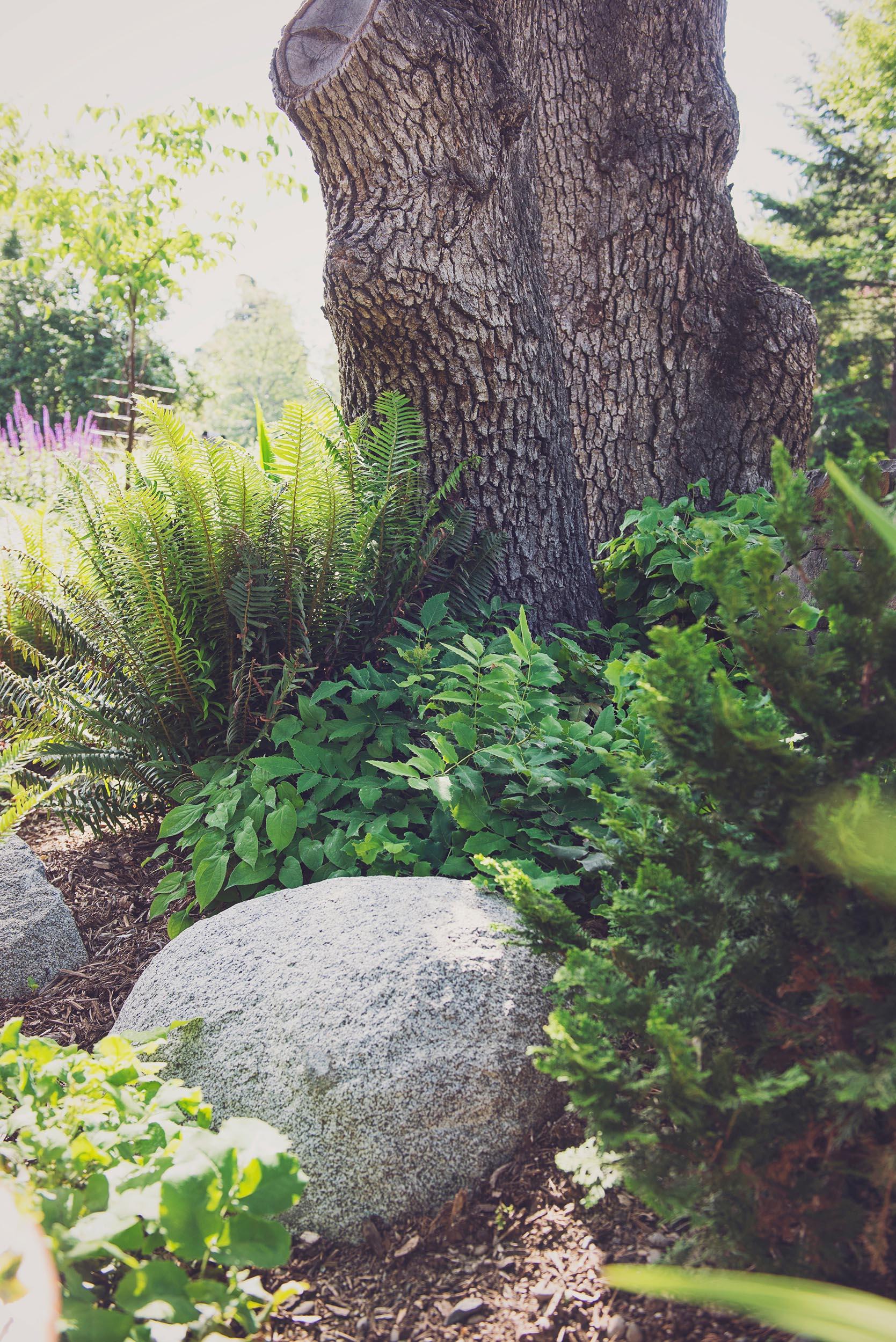 base of oak perennial garden + granite bouldrs + deer resistant perennial garden