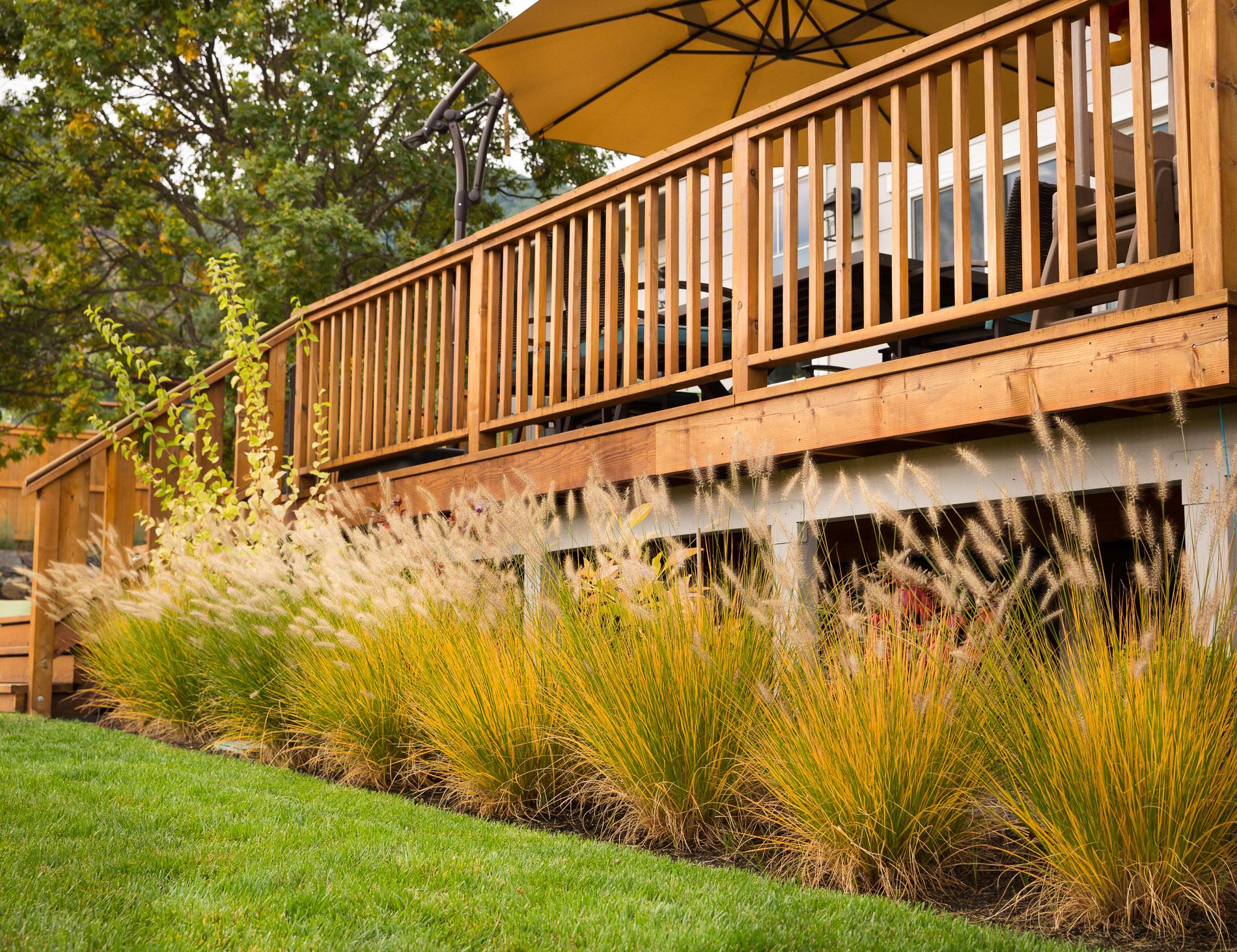 Dwarf Fountain Grass + Lawn Edge + Deck Border + Backyard