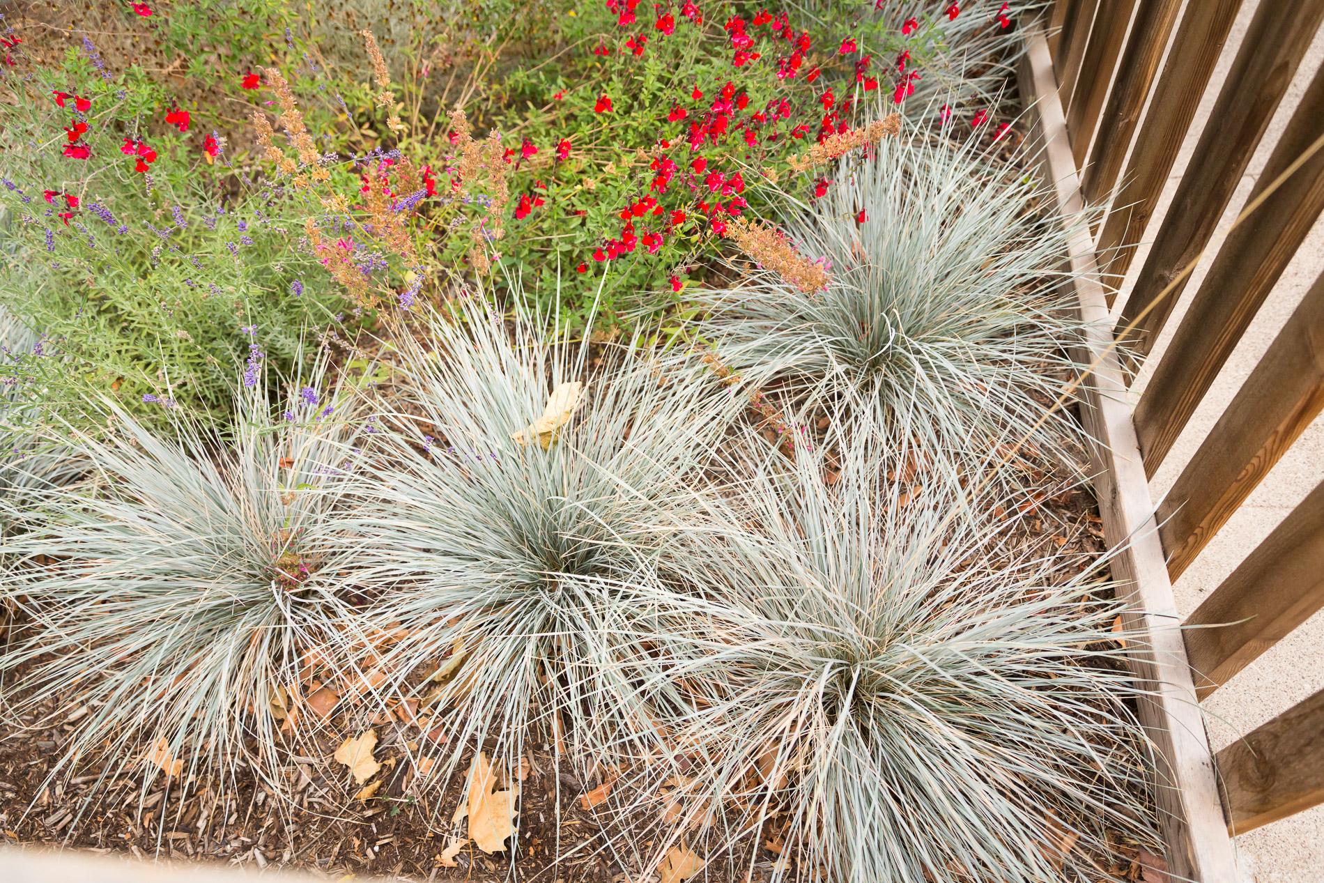 Idaho Fescue + Red Sage + Cedar Picket Fence