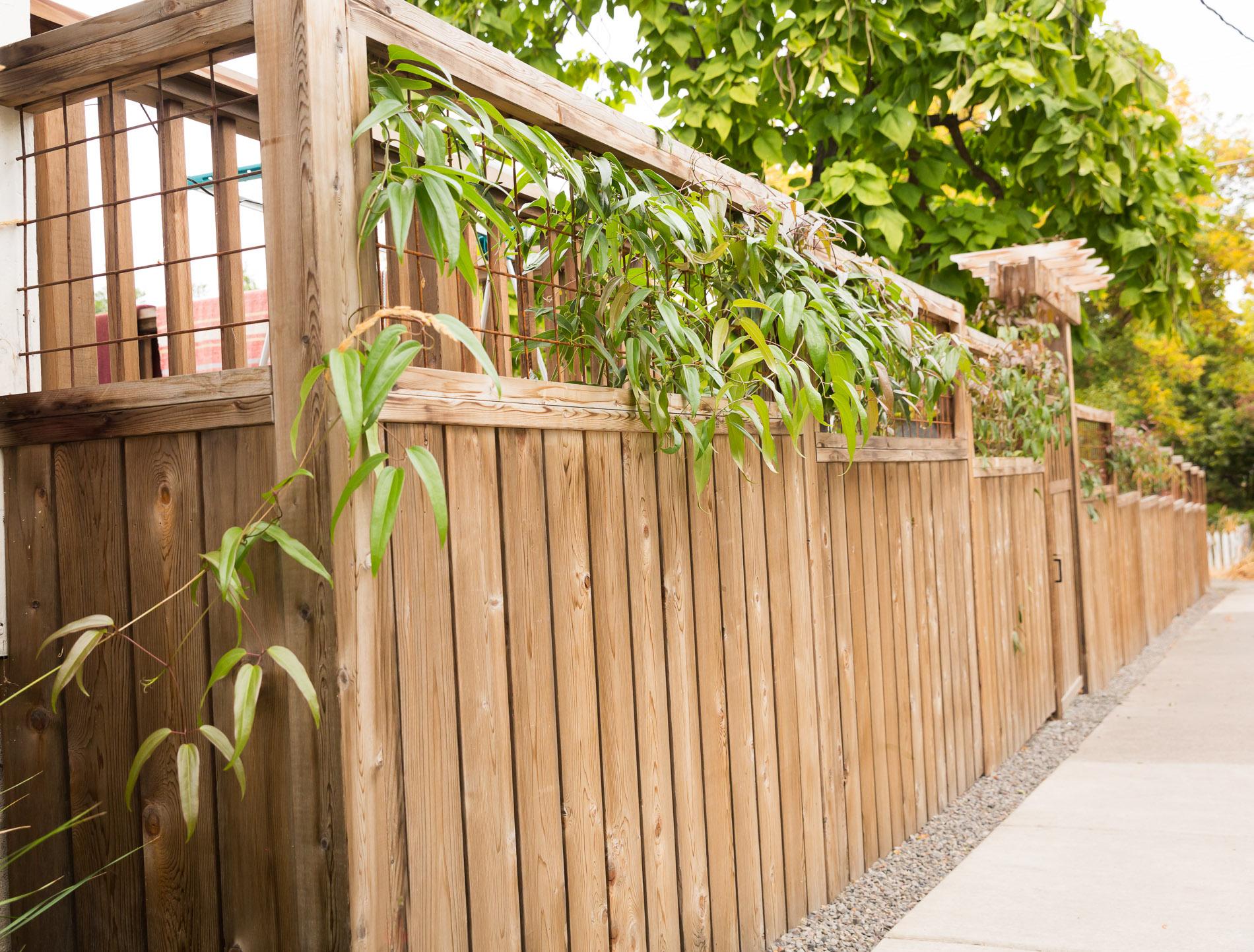 Urban Privacy Fence + Climbing Vines