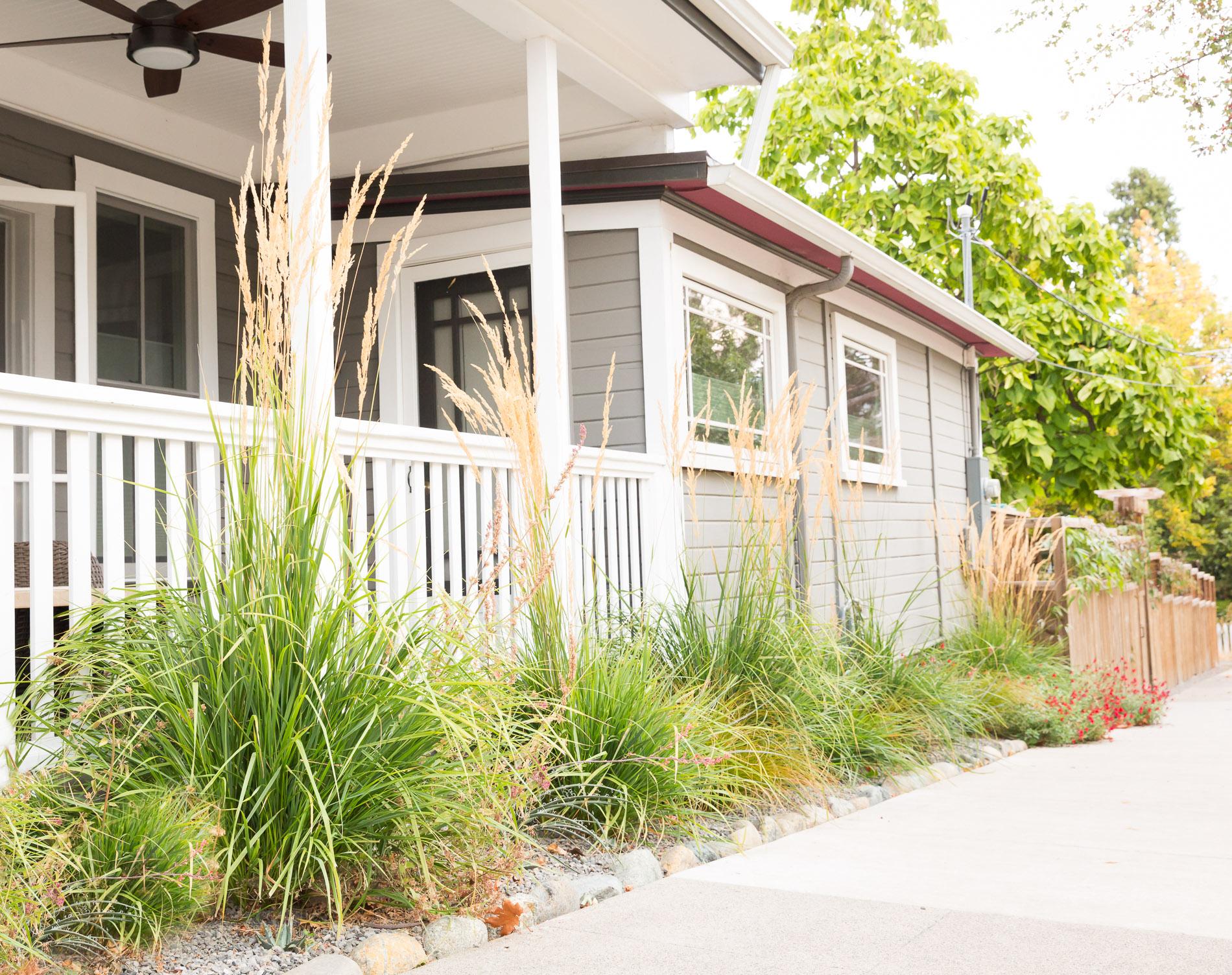 Sidewalk Garden + Street-Side Interest + Drought-Tolerant Perennials + Feather Reed Grass