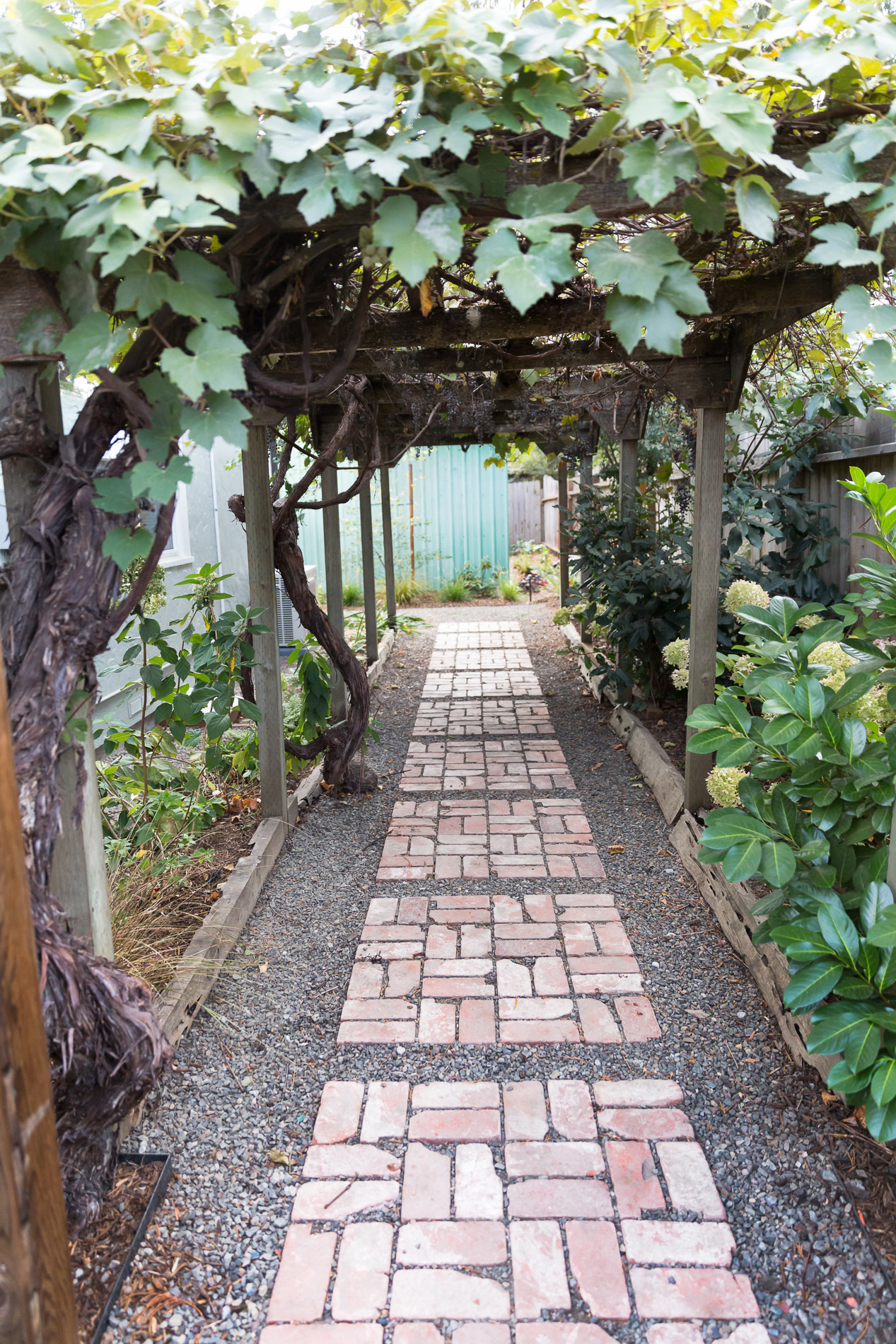 Grape Arbor + Segmented Brick Path
