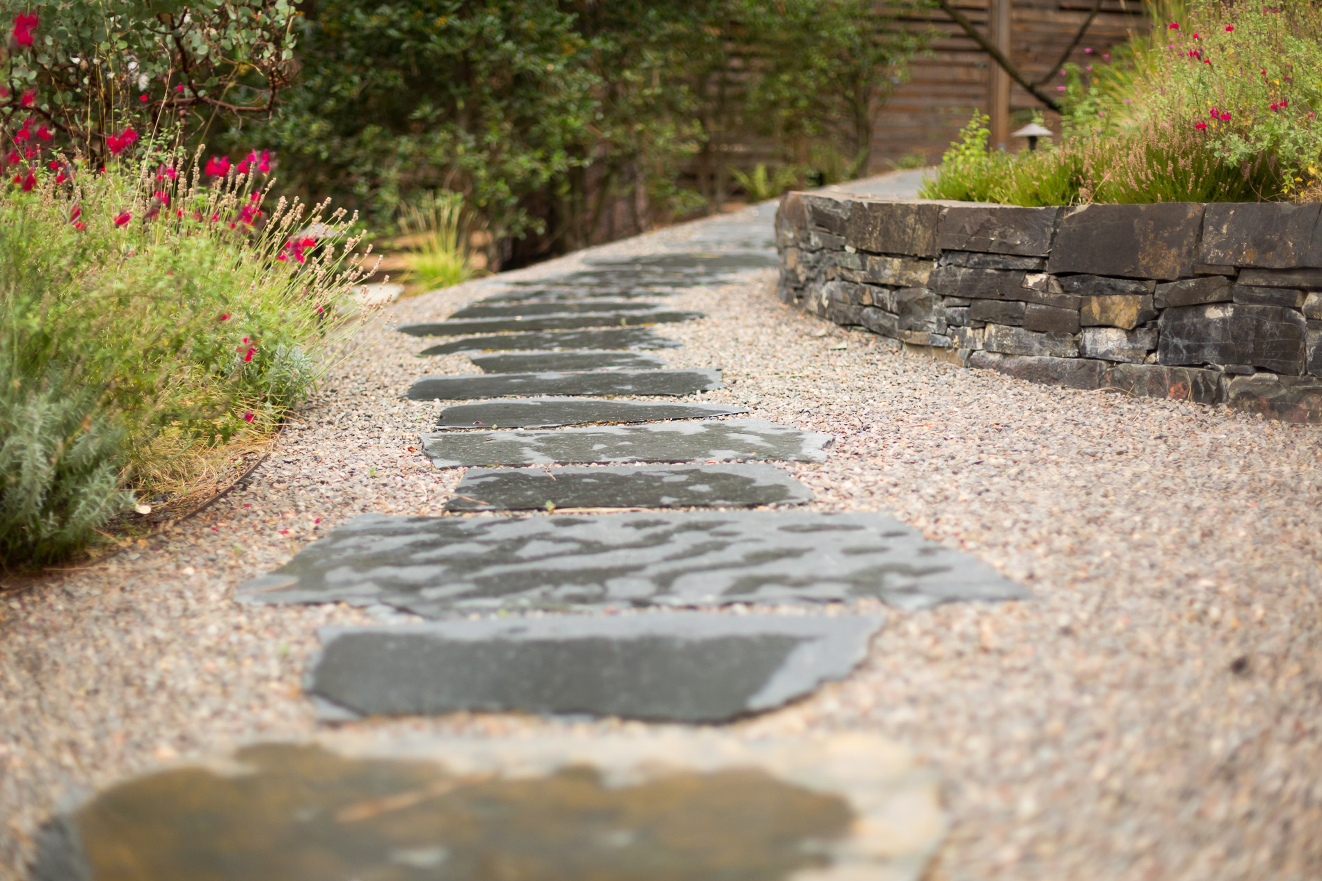 Wet Flagstone + Gravel Path + Salvia greggii 'Flame' (Red Sage)