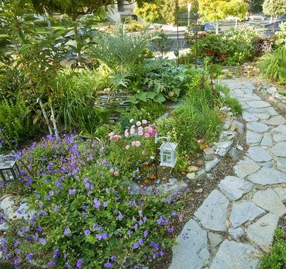 Heeft u ook zo'n zin in een weelderige, natuurlijke tuin waaruit ook nog iets te oogsten valt? Dan bent u bij Simple Food aan het goede adres!