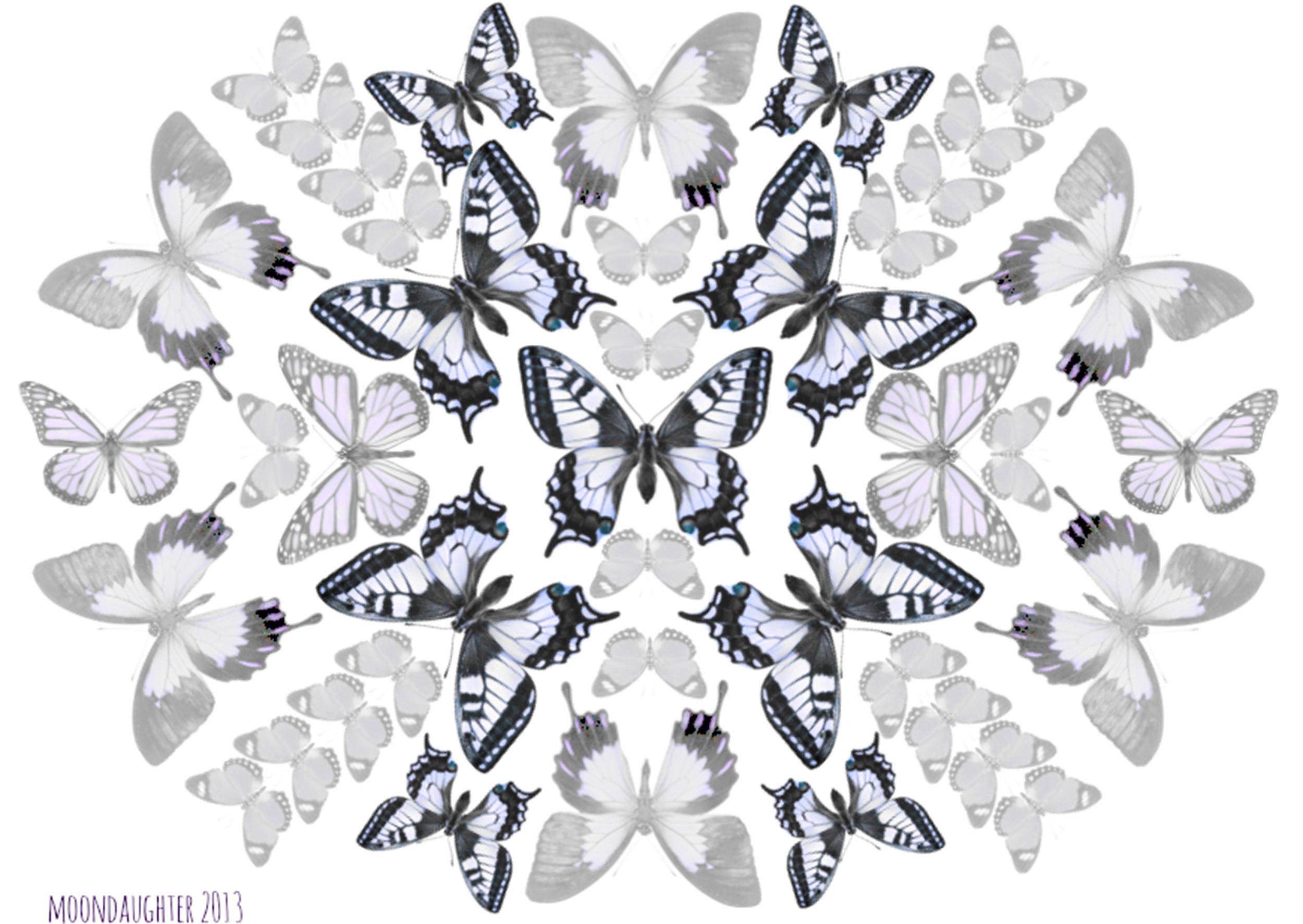 butterflymandala.jpg