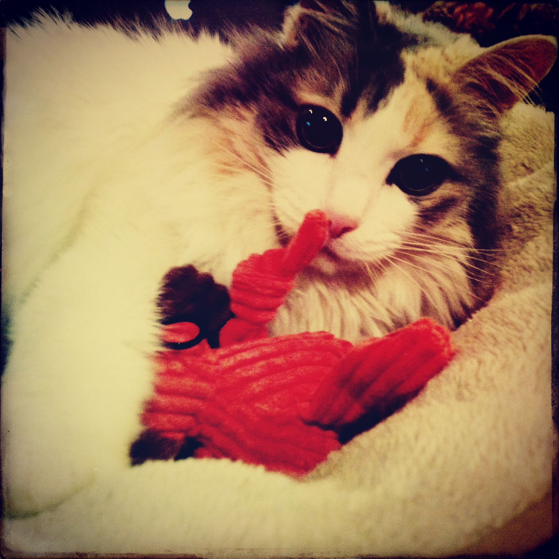 And her sweet kitty sent my kitty a toy, so sweet!