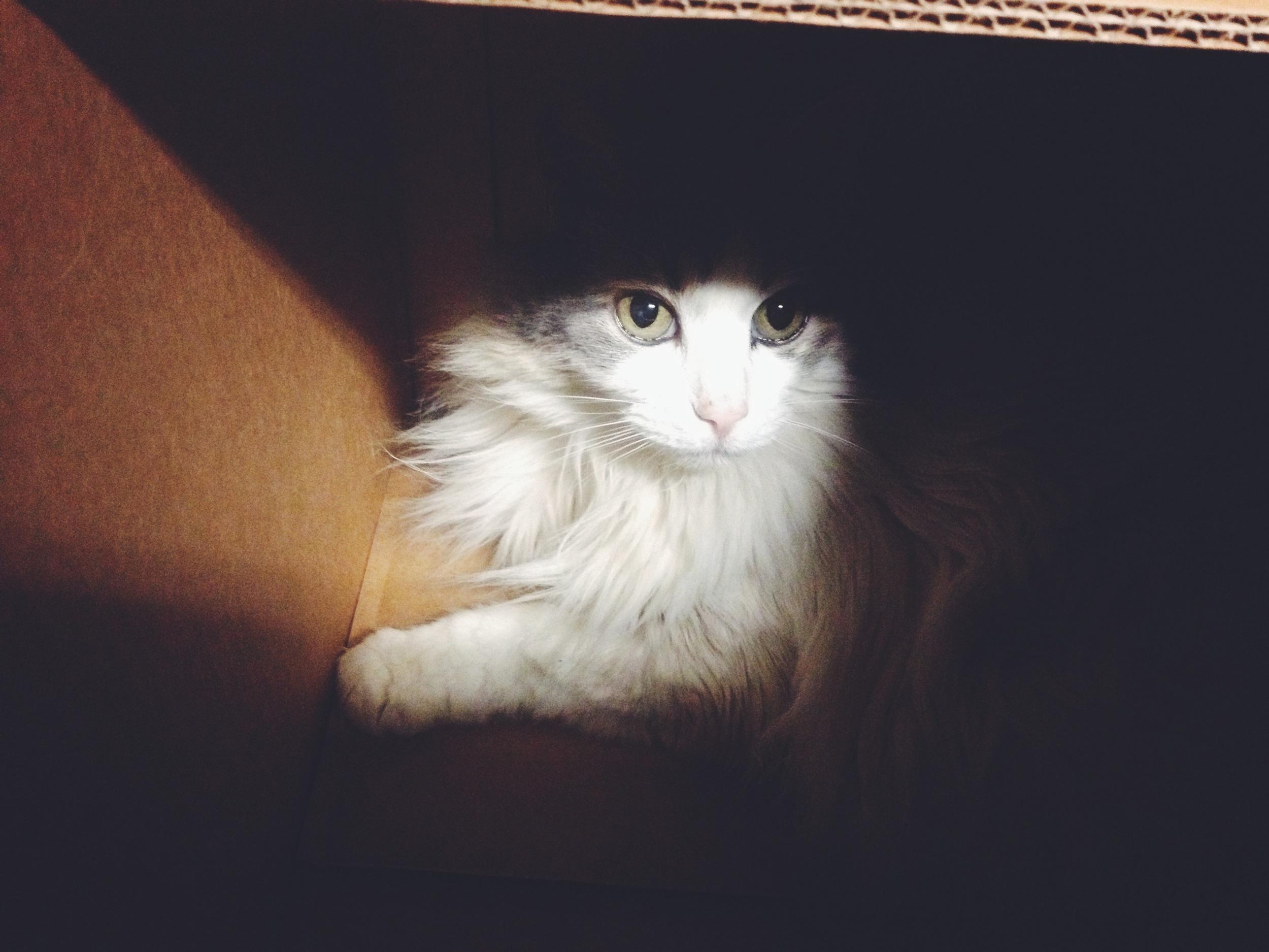 Bella in a box