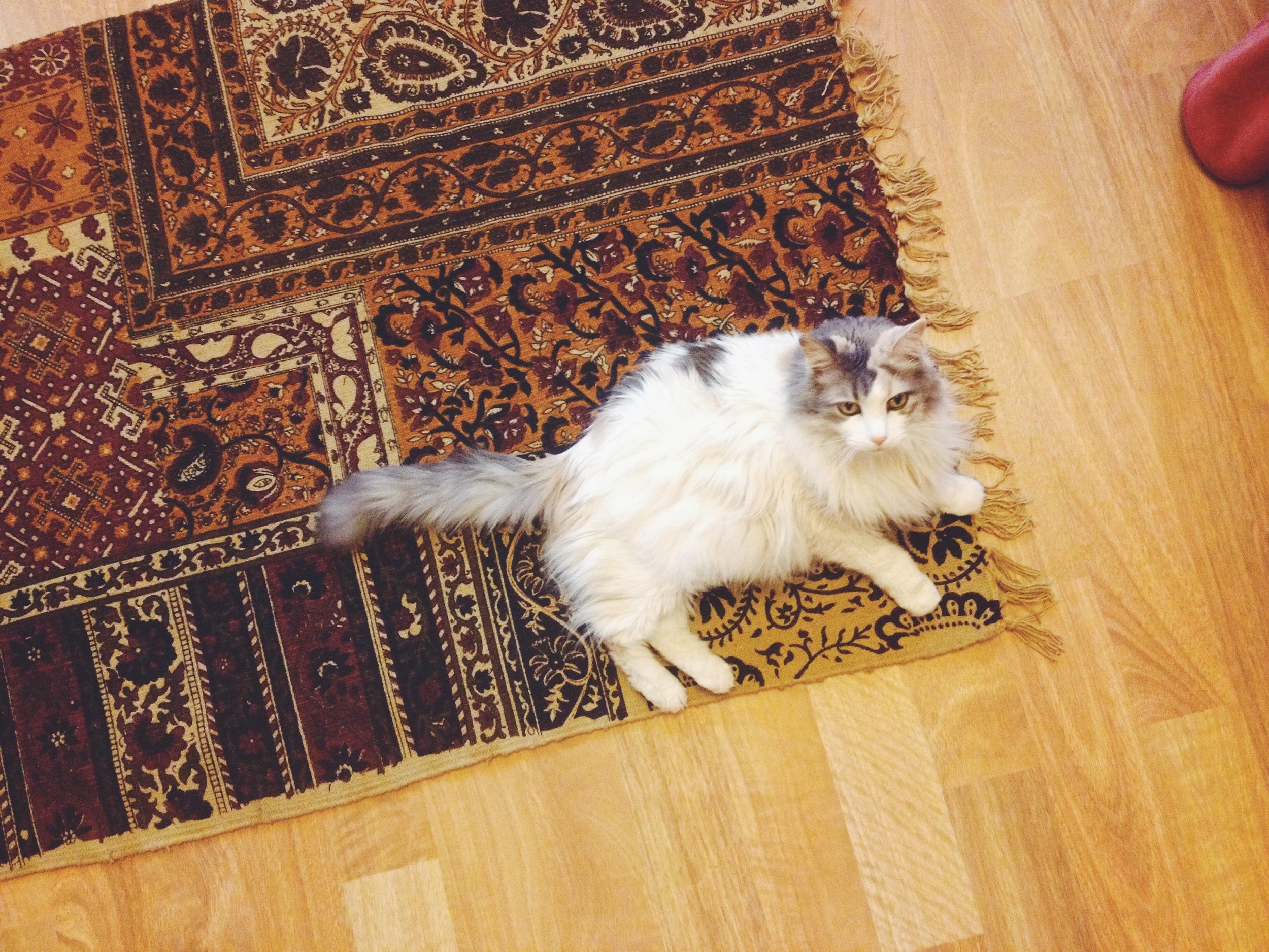 kitty on a pretty rug via rootsandfeathers.com