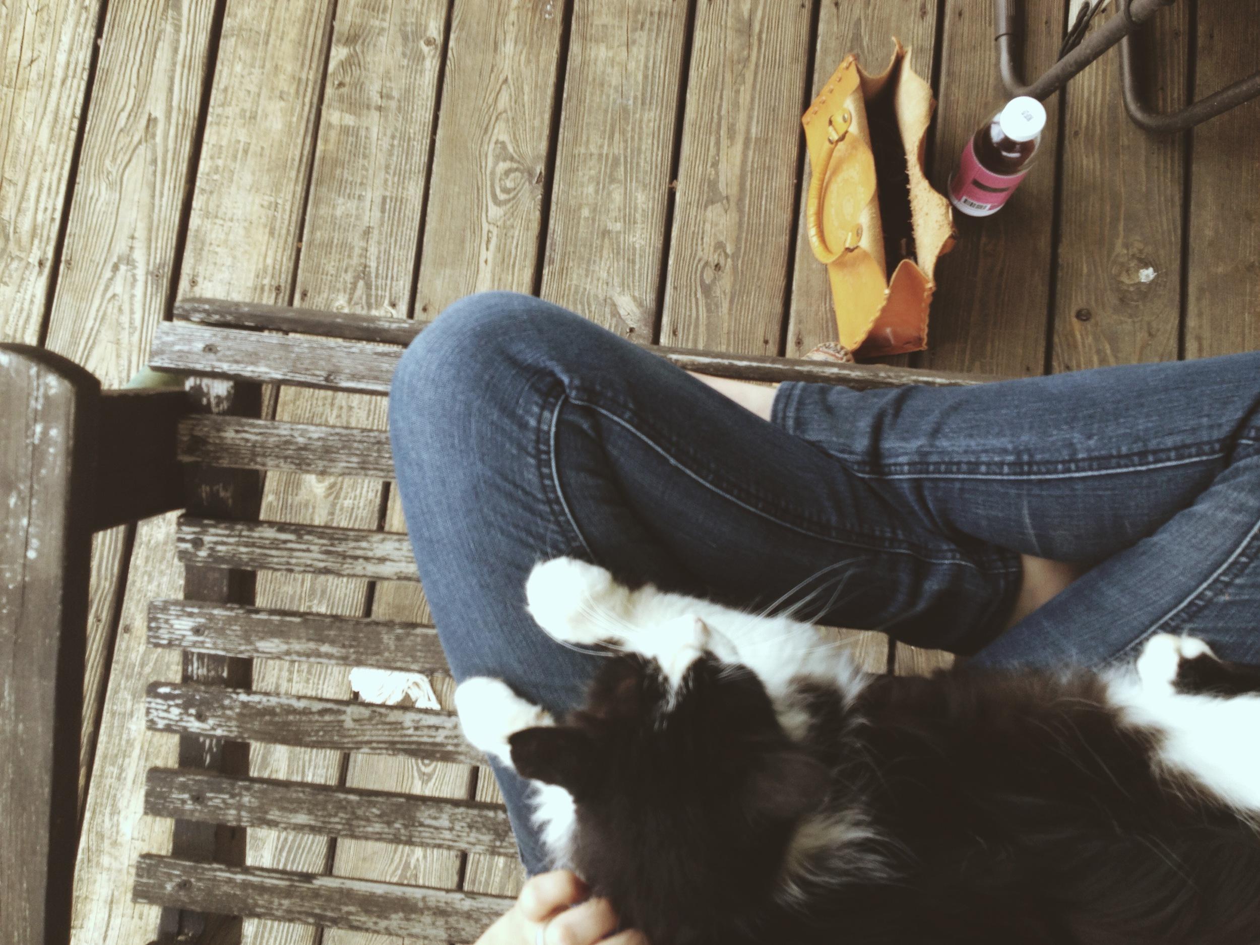 Cat in a lap