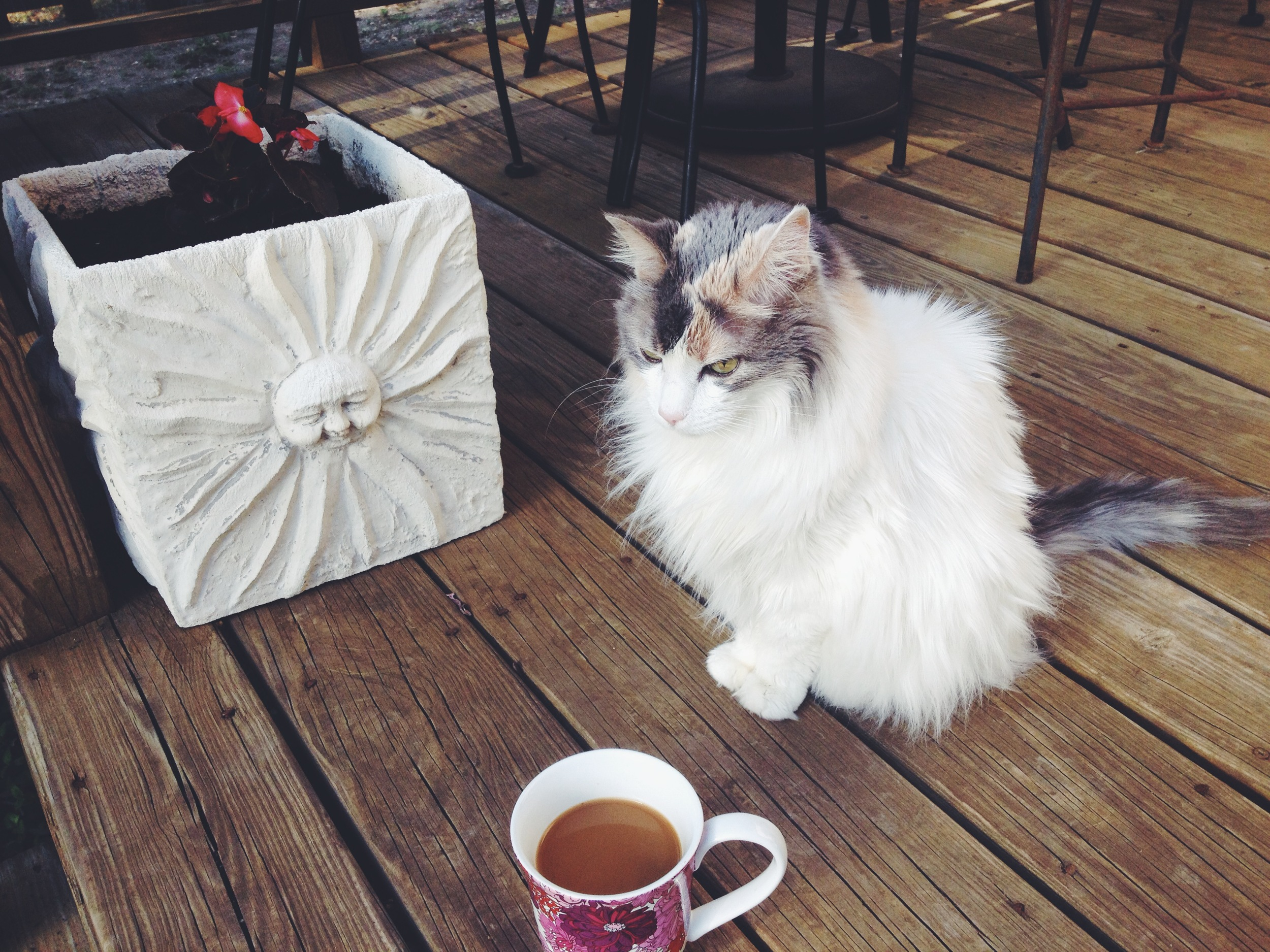 Coffee & Kitty in the morning