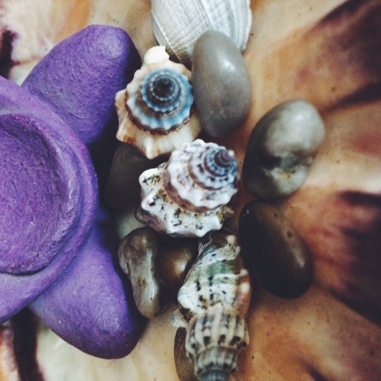 seashells - elemental