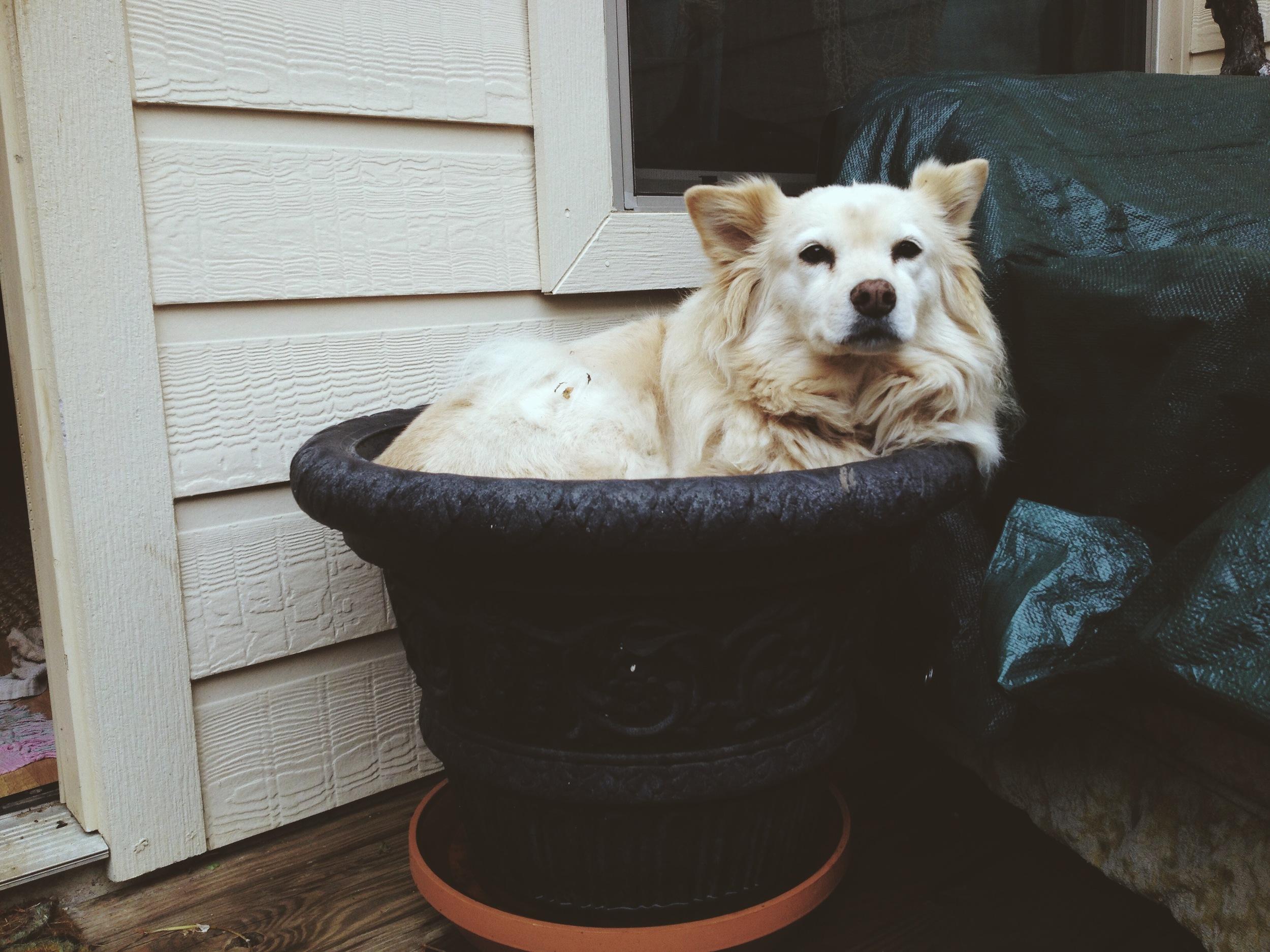 A pup in a pot :)