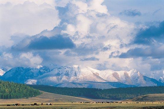 Aguila-Mongolie-2.jpg