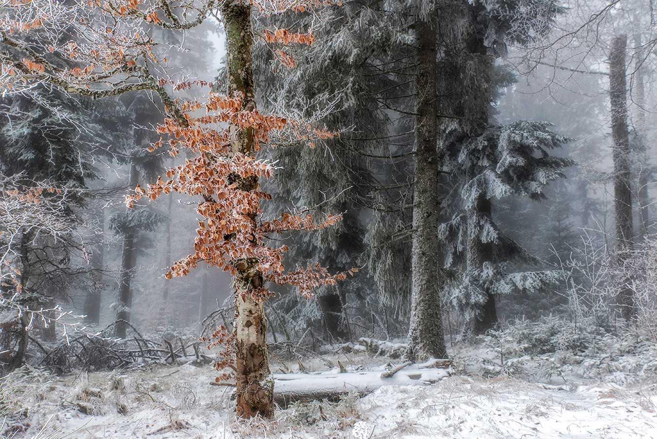 Roland Avard - Neige et brouillard.jpg