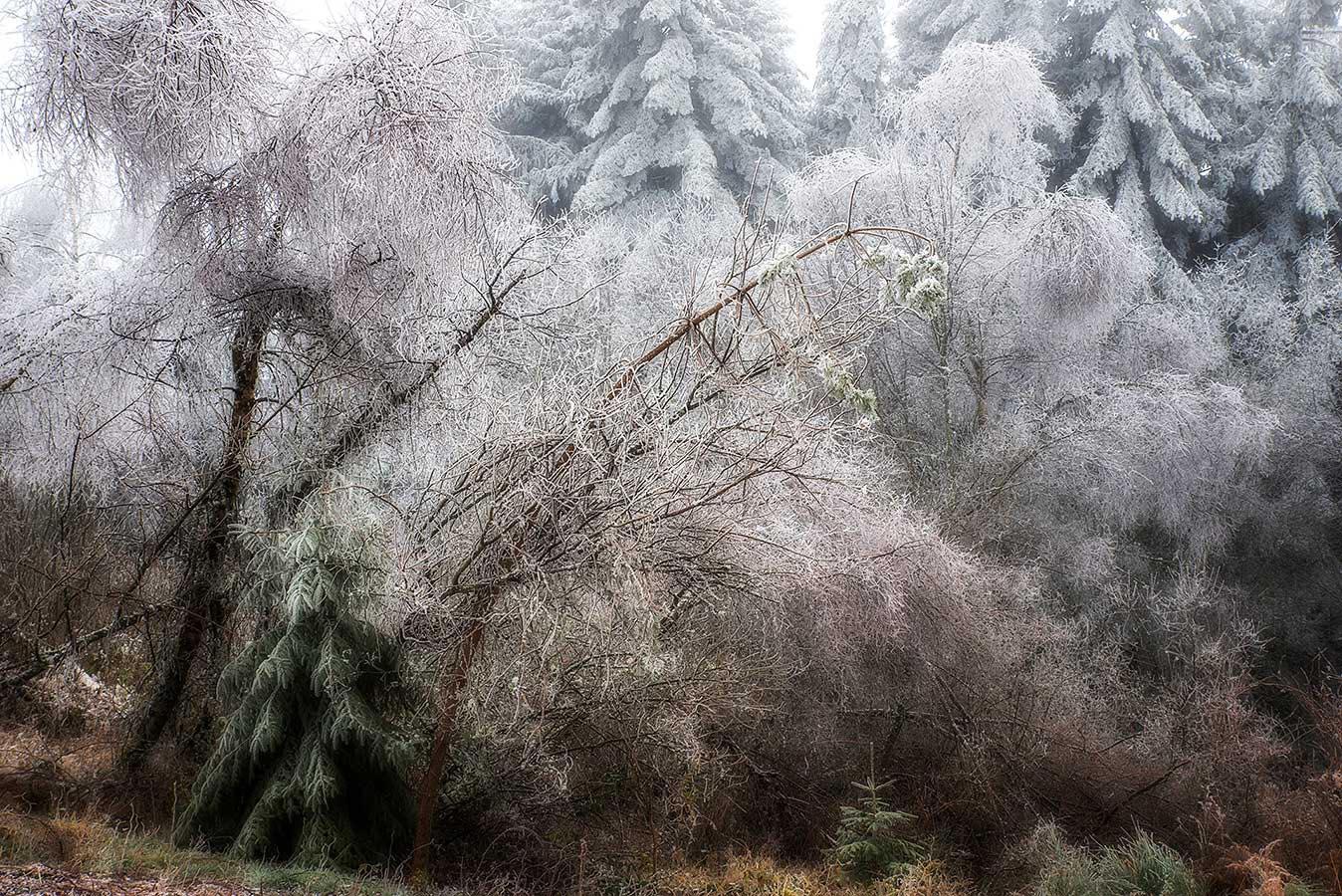 Roland Avard - tendresse hivernale.jpg