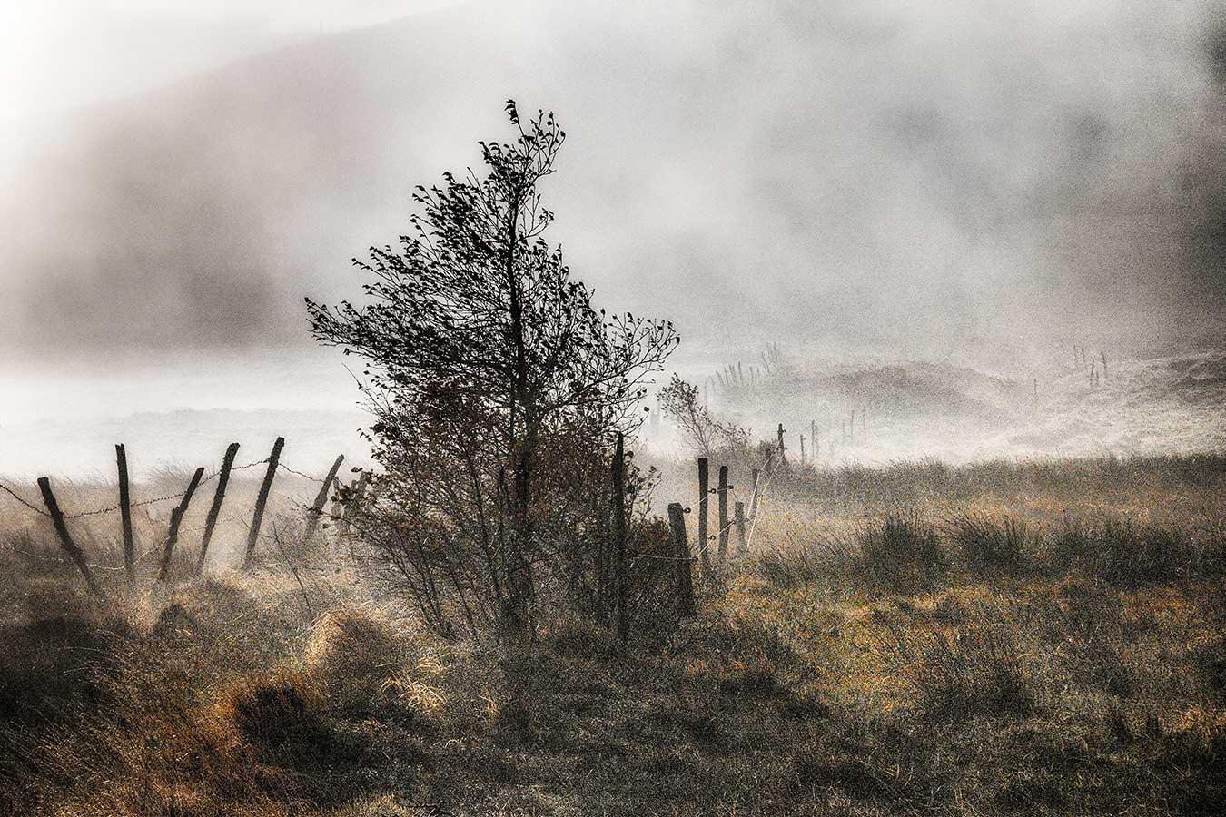 Roland Avard - La clôture.jpg