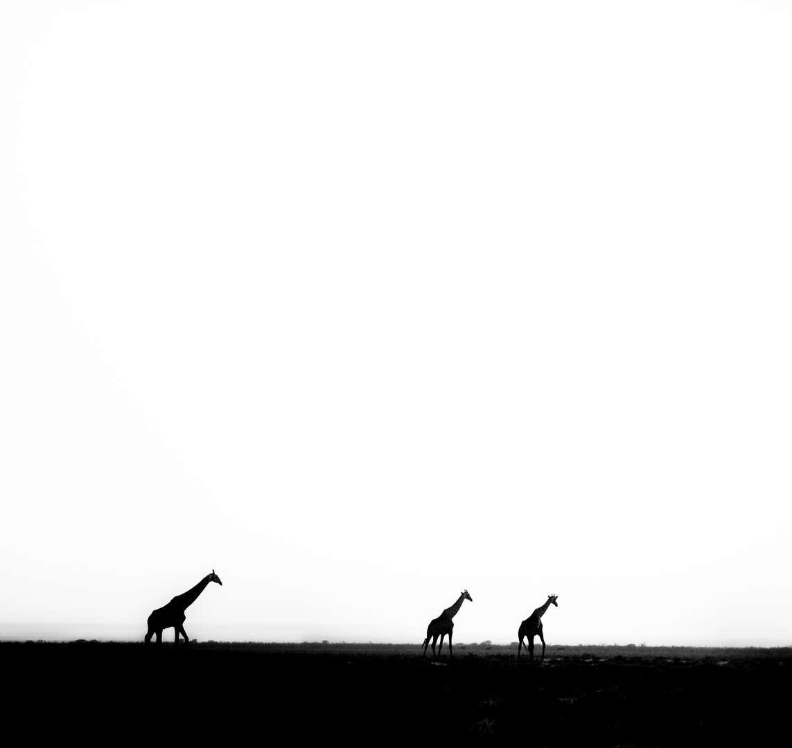 Leo GAYOLA - 13.jpg