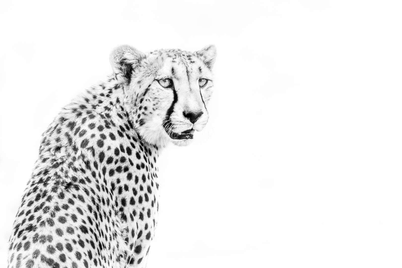 Leo GAYOLA - 14.jpg