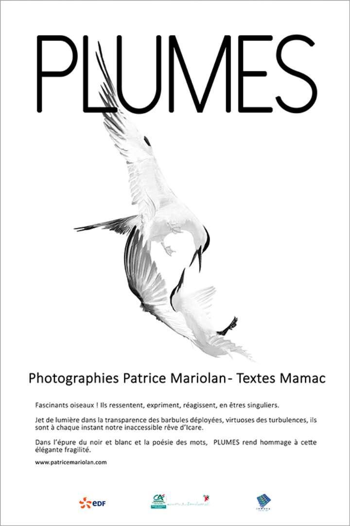 Patrice MARIOLAN - 20.jpg