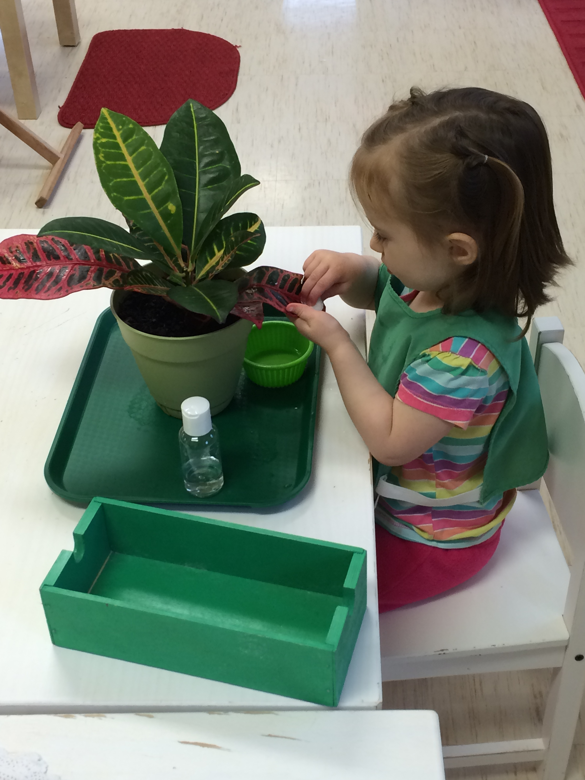 Plant washing is a practical life skill that gives the child the opportunity to care for the world around them while building concentration.