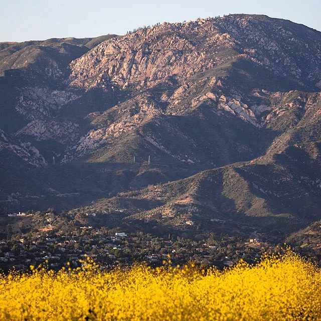 Spring has sprung...on to summer! #seesb #santabarbara