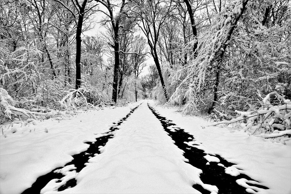 Le phrasé somptueux du cauchemar forestier de Grégory Le Floch - Livres | Fuite circulaire et affrontement de la vérité d'un traumatisme : une magie incantatoire entre Forêt-Noire et Calabre. Un tour de force narratif qui explore comme rarement on l'a fait les méandres des frontières de la folie et de la raison, du souvenir et de la menace, de la culpabilité et de la confusion.