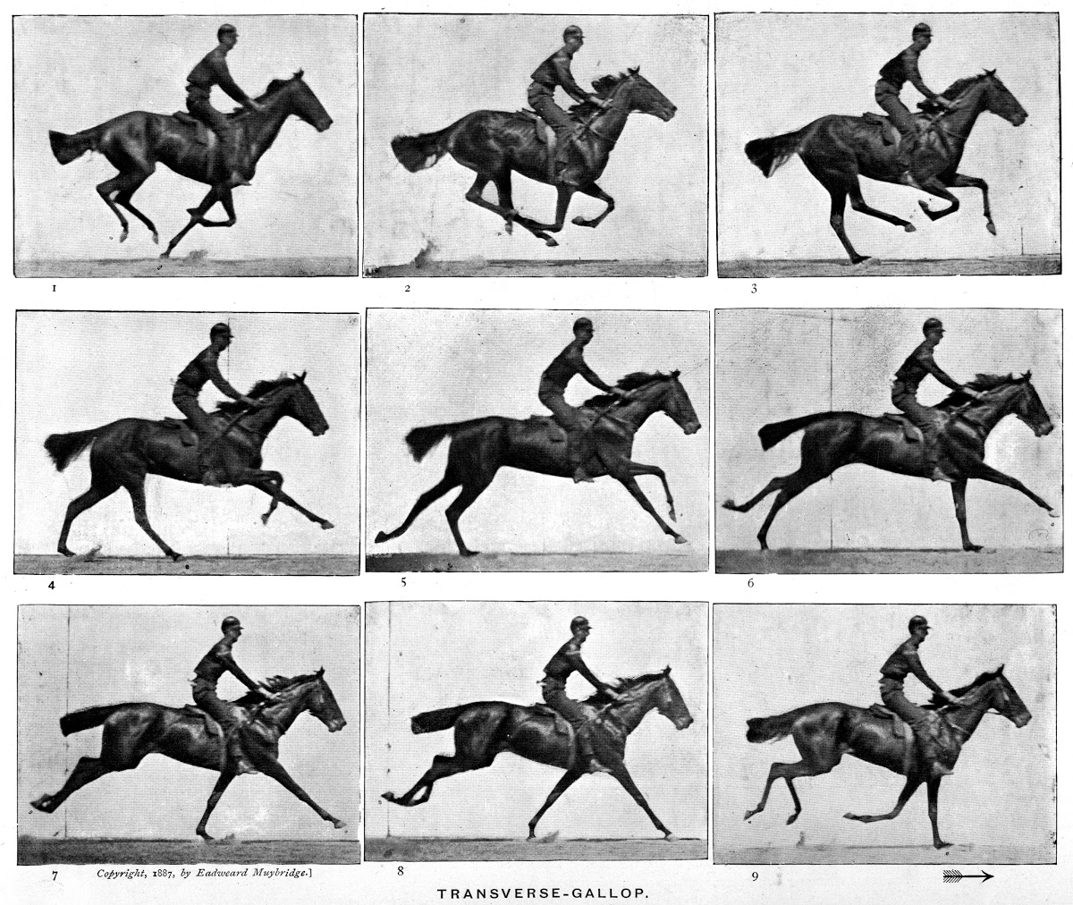 Muybridge : au galop !