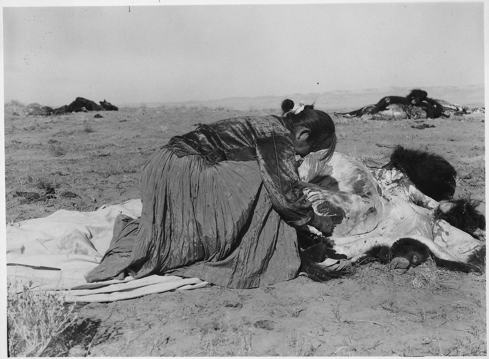 Woman harvesting bison meat and preserving the hide.  Photo courtesy of Wikimedia Commons.