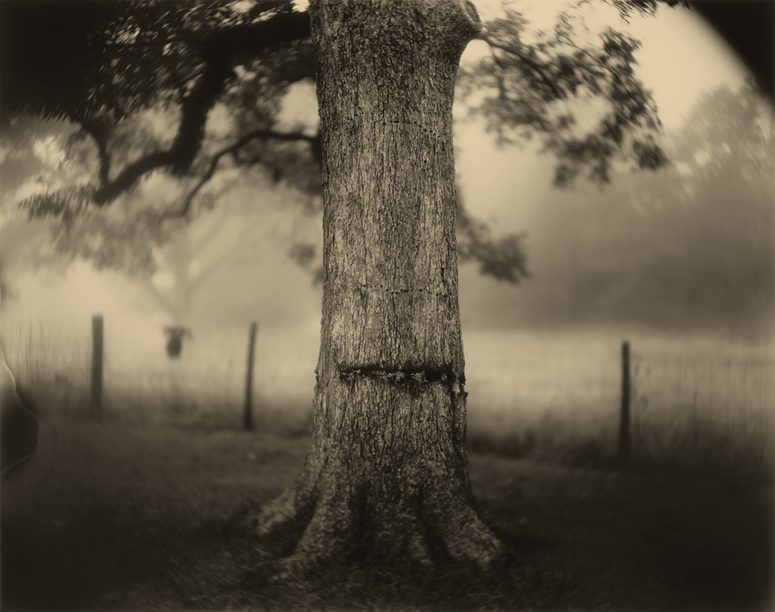 Deep South, Untitled (Scarred Tree)  (1998) Sally Mann Gelatin silver print National Gallery of Art, Washington, Alfred H. Moses and Fern M. Schad Fund. © Sally Mann
