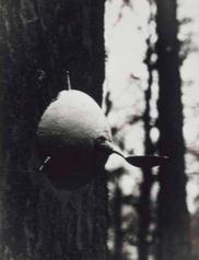 Raoul Ubac ,  Le Sein dans la nature,  1935, musée des Arts de Nantes