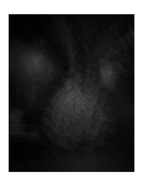 palmier-13NC OLIVIER MONGE, RÉSIDENCE MAROCAINE ART PHOTOGRAPHIE