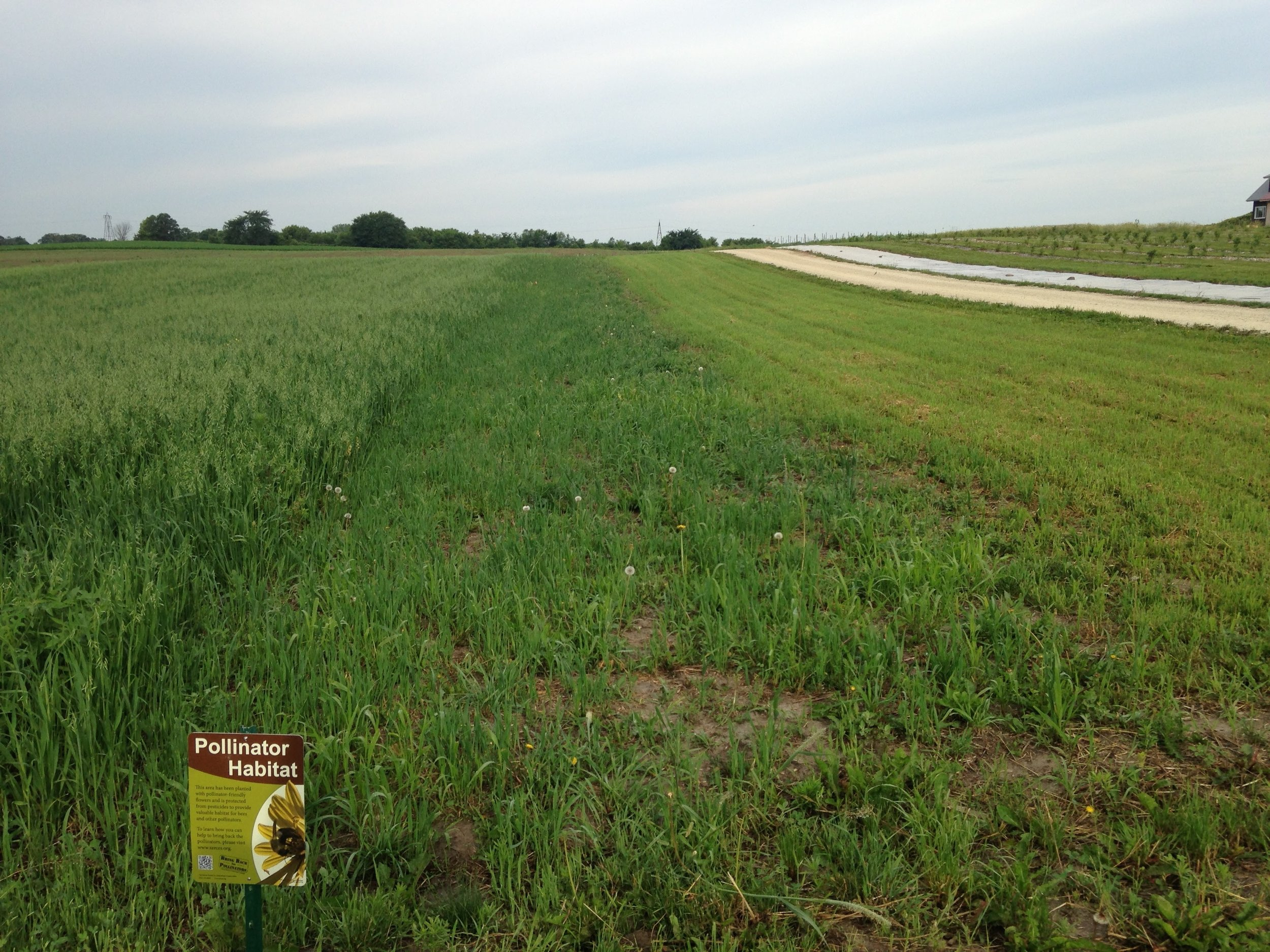 Native Prairie Strip Three Months After Planting