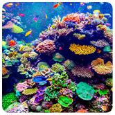 Aquarium Scientist