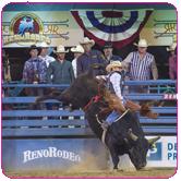 Professional Bull Rider