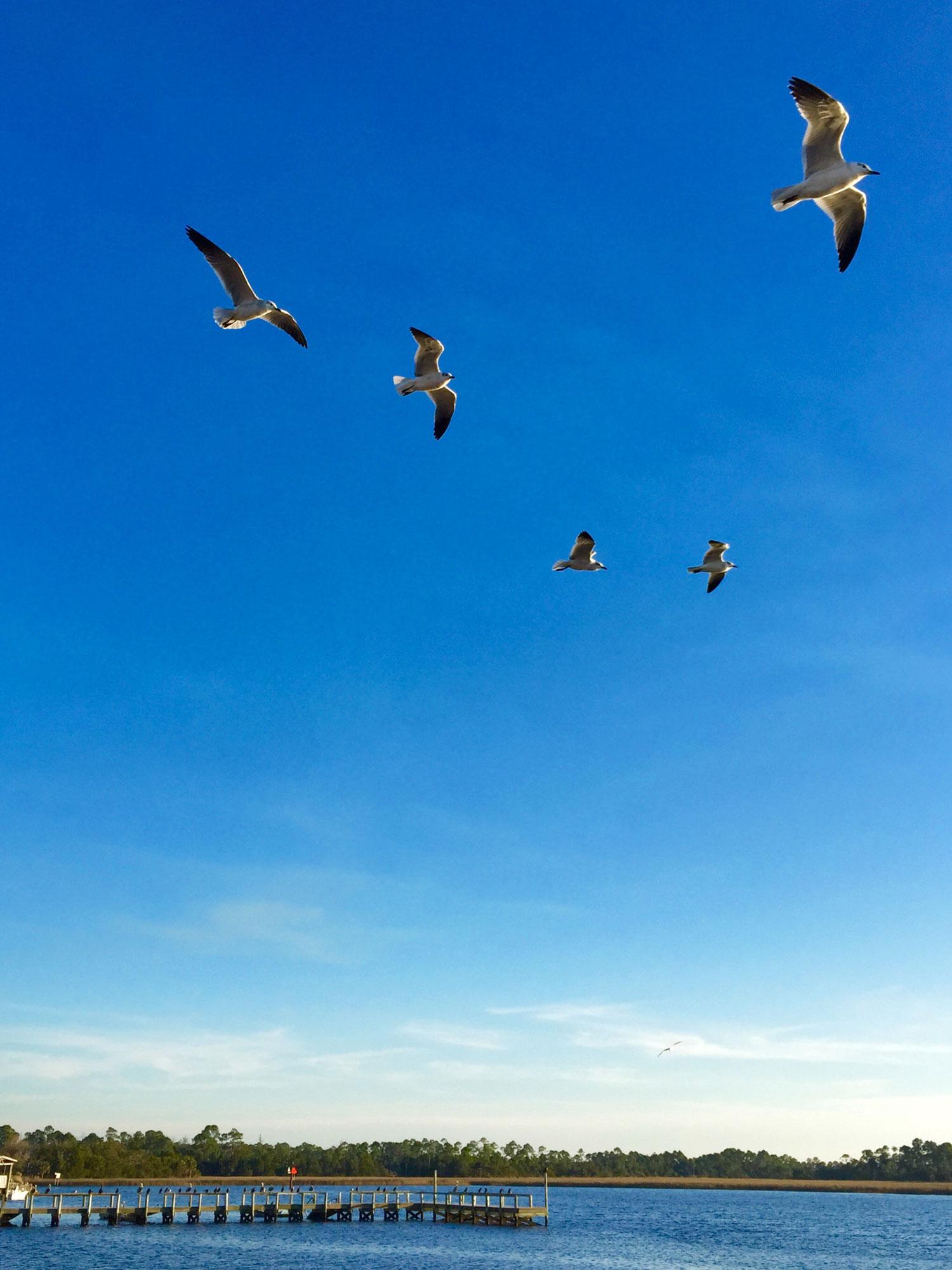 Seagulls 12-2014