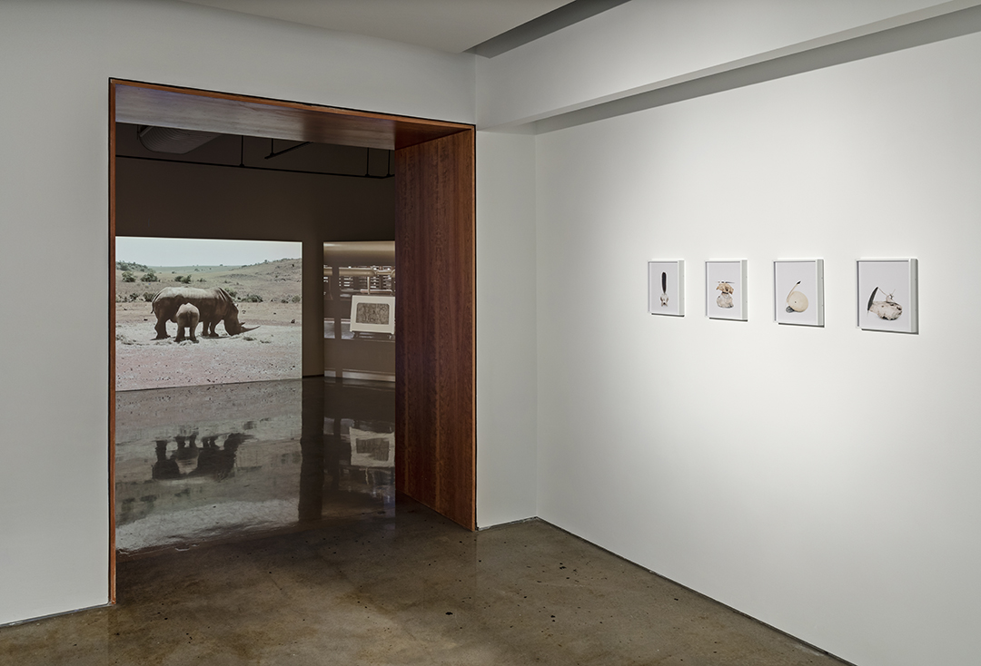 """Installation View: """"A Poetic Truth in a Pathetic Fallacy"""" & """"From the Cradle I Collect,"""" Doris McCarthy Gallery at the University of Toronto Scarborough, 2018"""