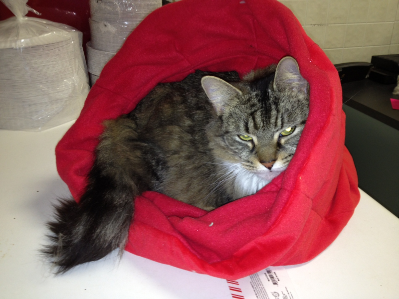 lizzie-homeless-animal-adopt-league.jpg