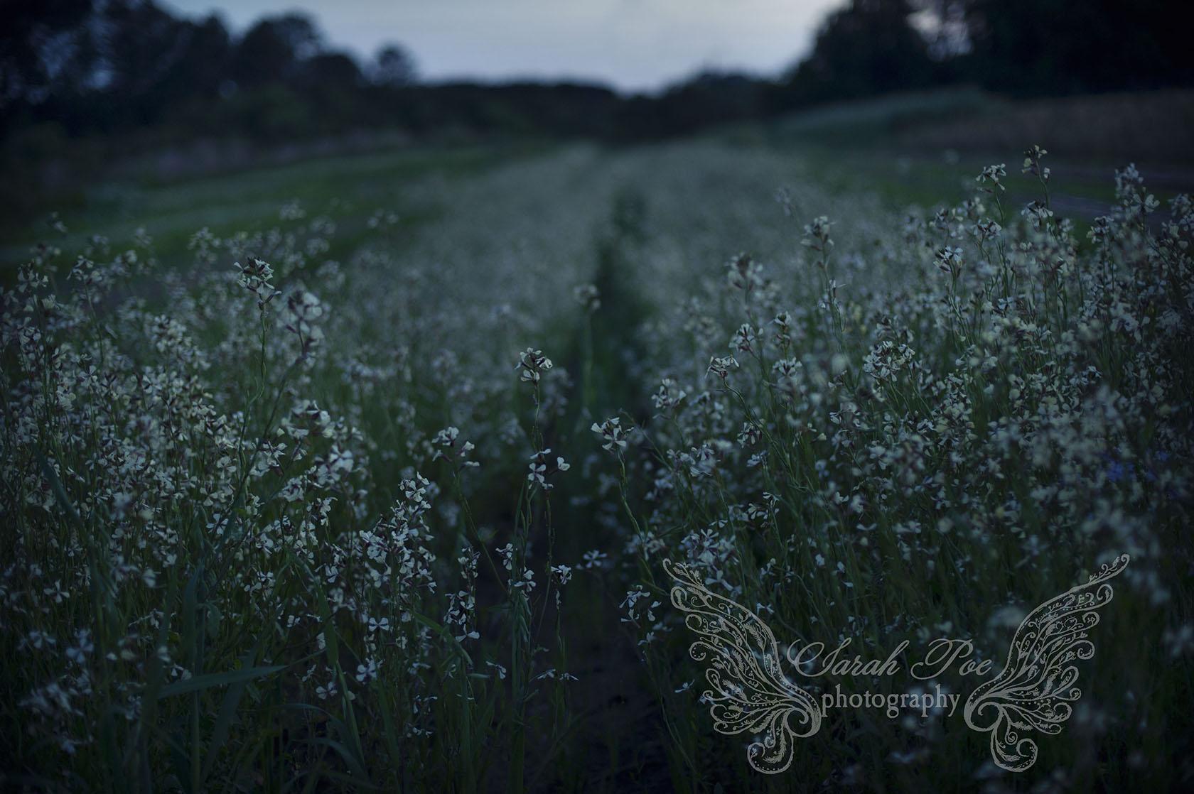 sarahpoephotography.summerfieldsc.jpg