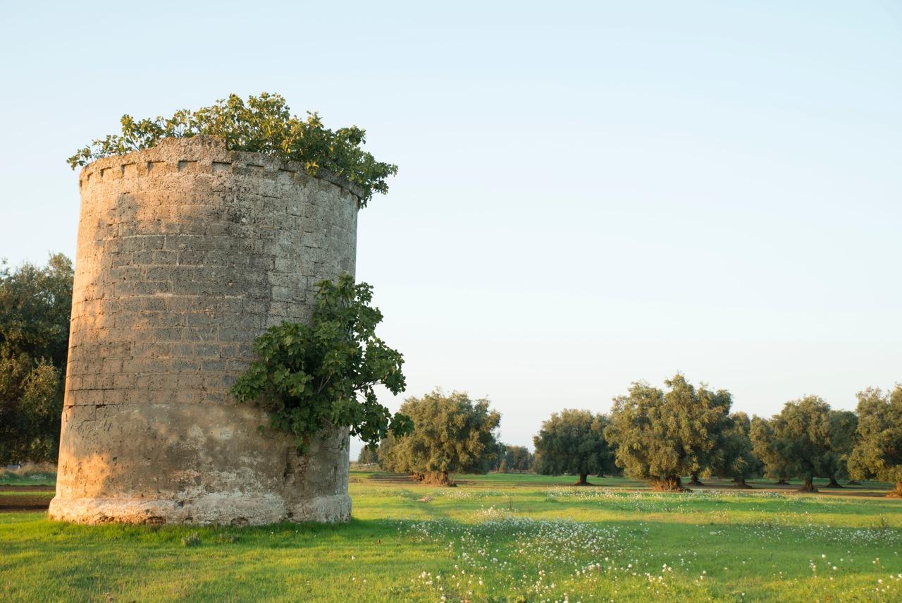 An abandoned  palummaru  (dovecote) outside Carosino. Photo by Vincenzo Cuomo.