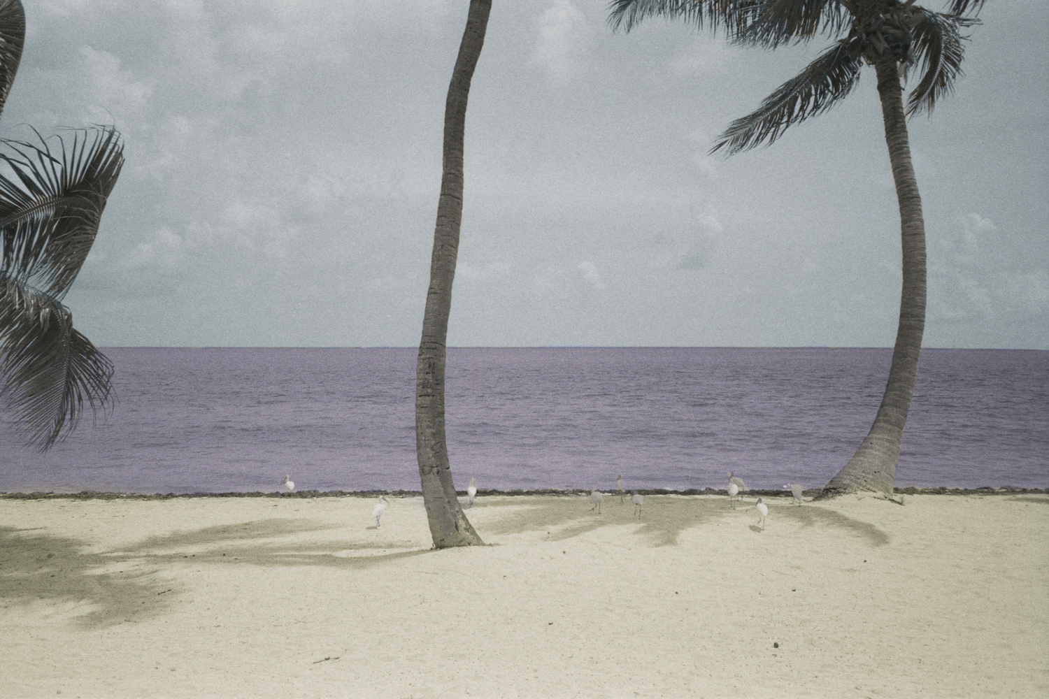 (Un)colored, Islamorada